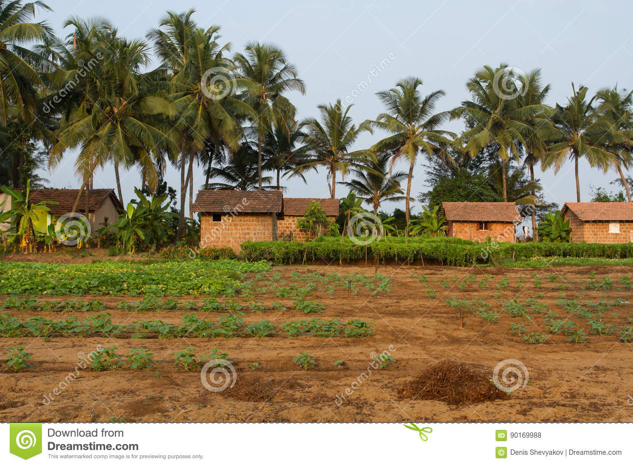 Indian Village Fresh Land And Brick Houses Stock Photo