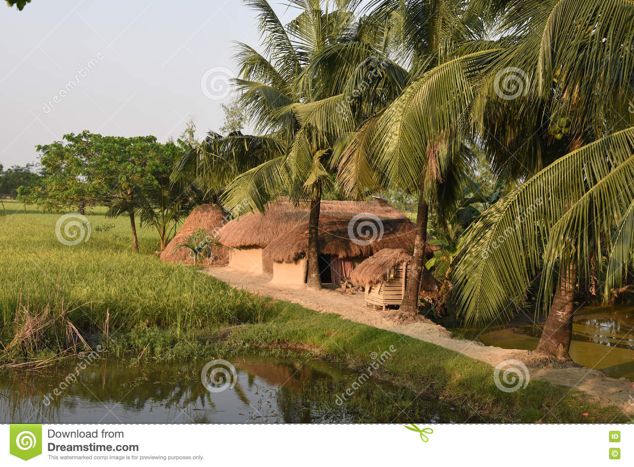 Indian Village Stock Photo Image Of Shadow Nature Green