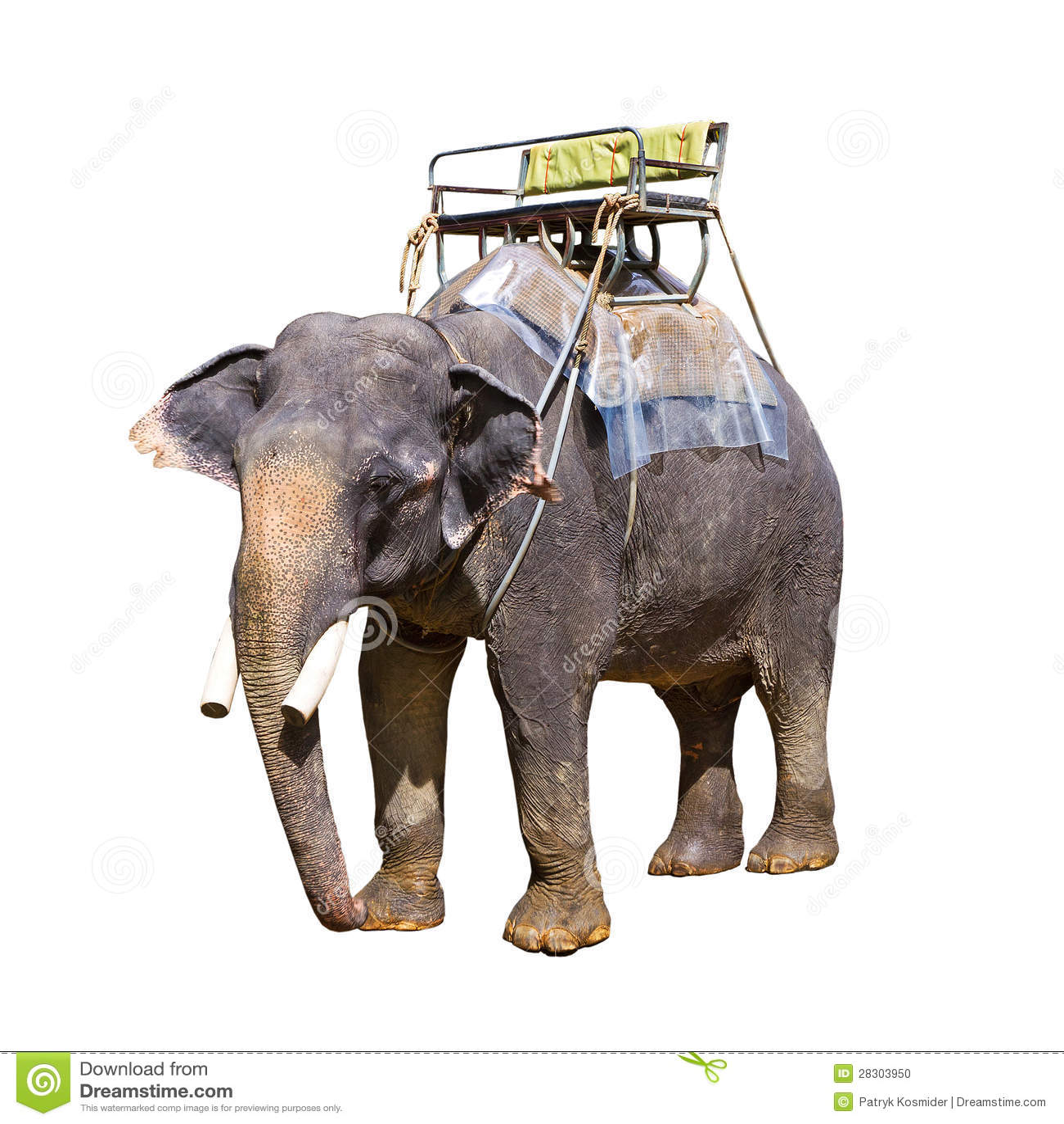 indischer elefant mit bank stockfoto bild von haut. Black Bedroom Furniture Sets. Home Design Ideas