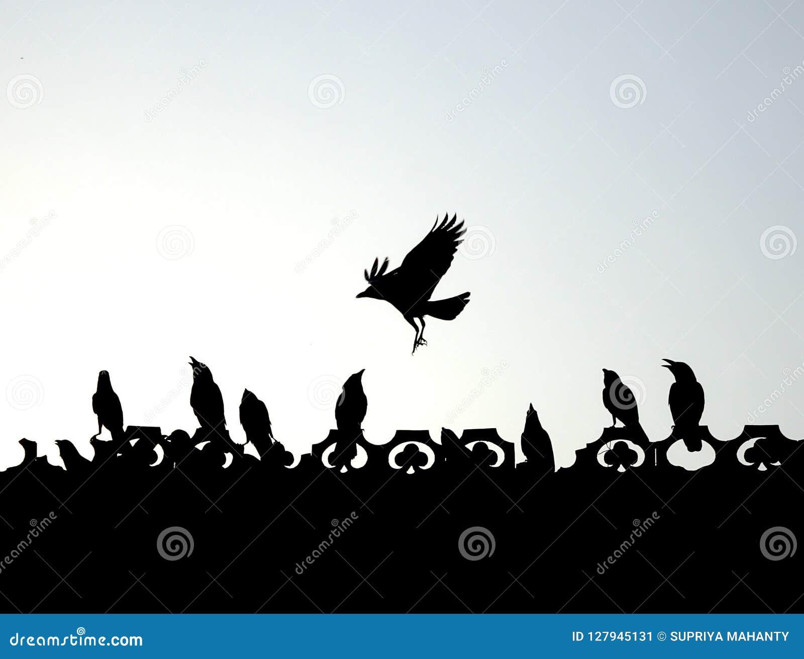 Indiska galanden som flyger, spela som slåss tycka om konturn