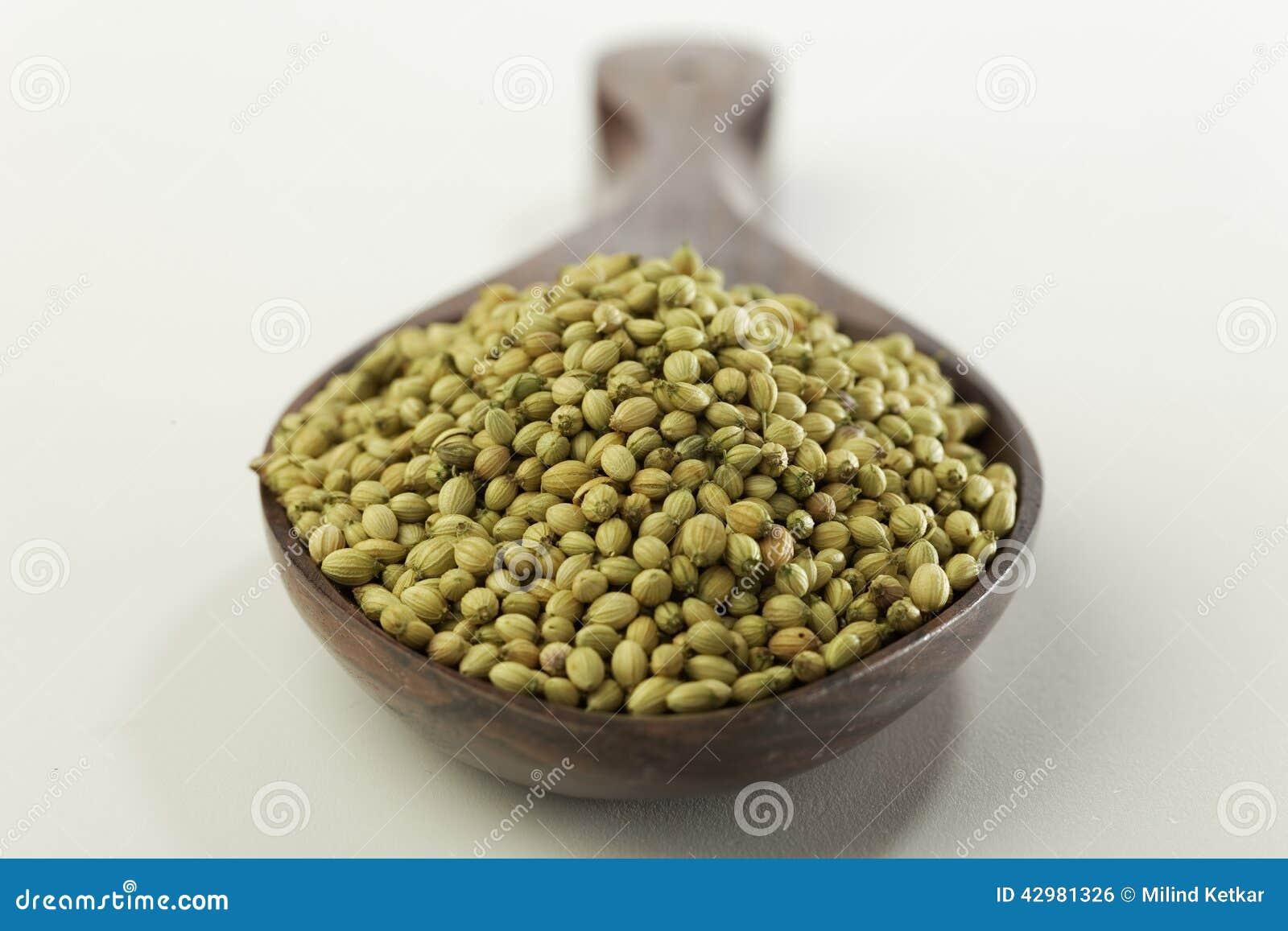 Indiskt krydda-koriander frö