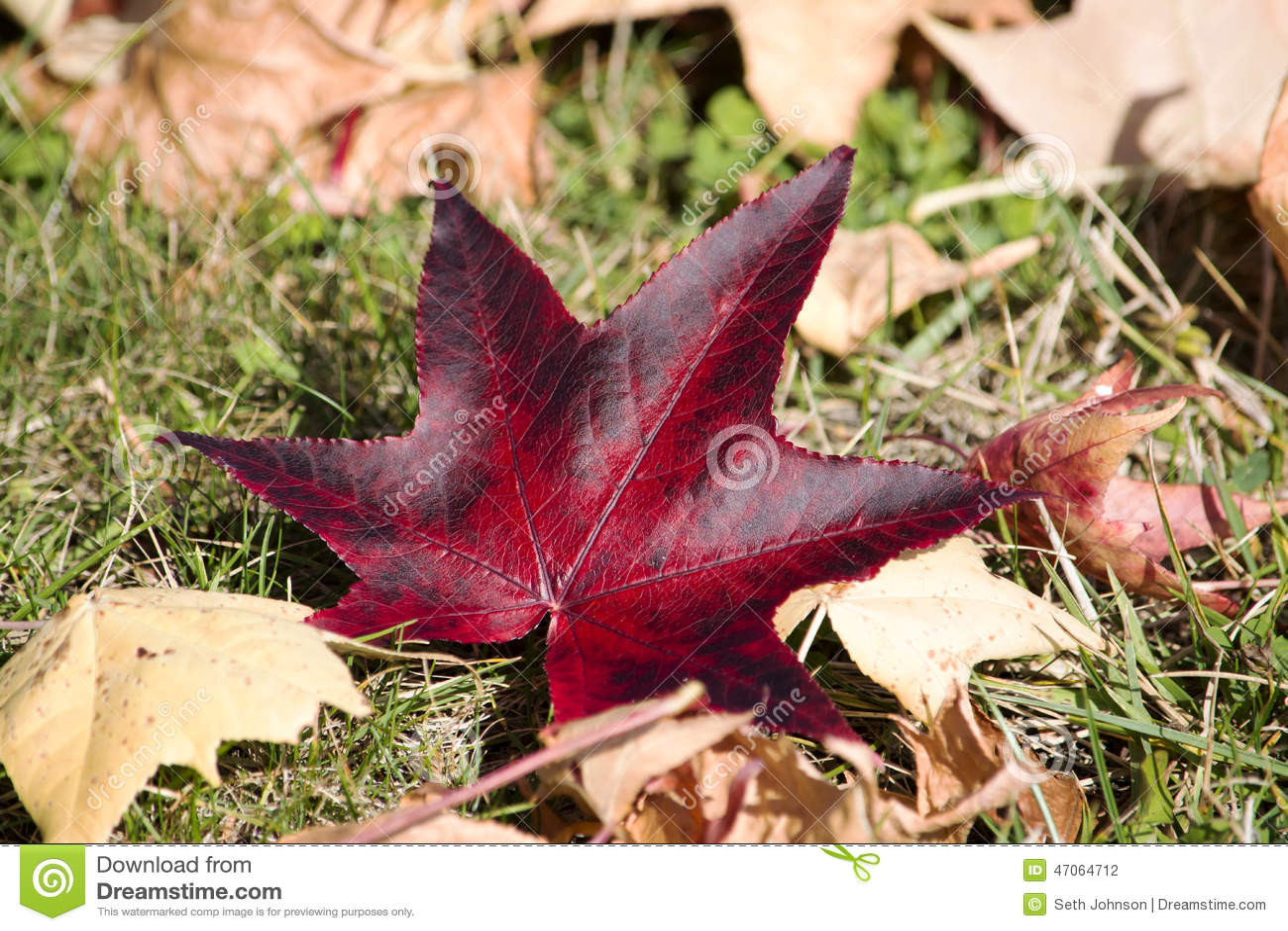 individualistic stock photo image of sunshine individualistic