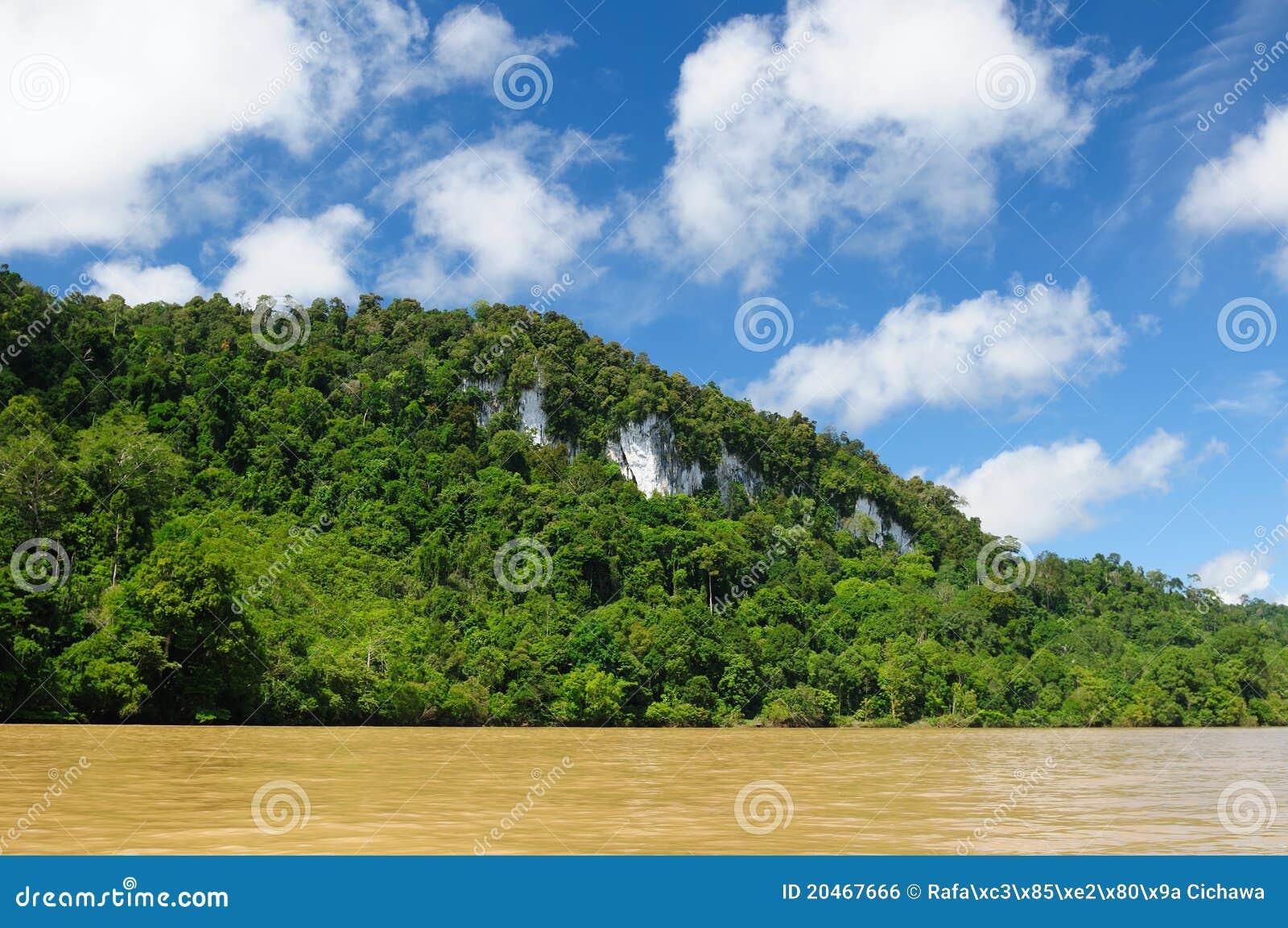 Indonésia - selva tropical no rio, Bornéu