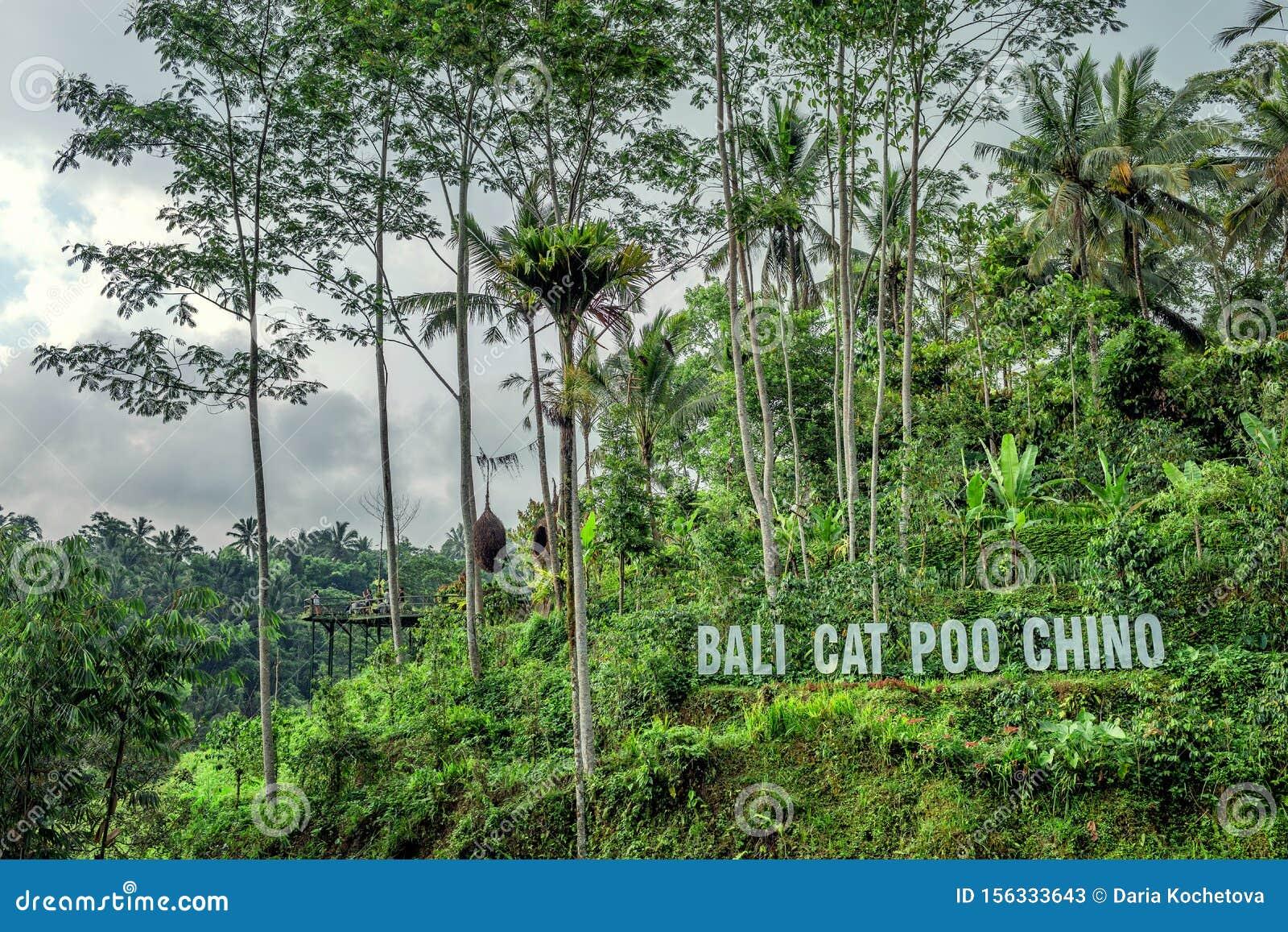 Bali Coffee Plantations   Luwak Coffee - Places to Visit  Kopi Luwak Coffee Plantations