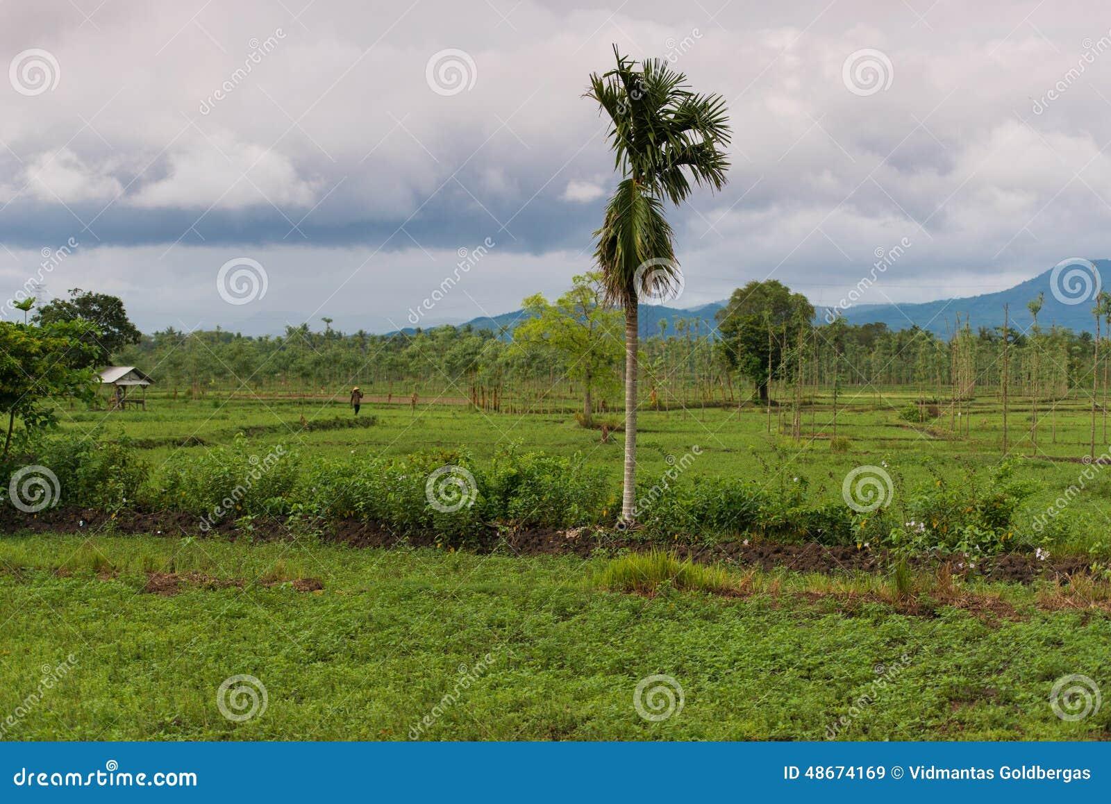 Indonesian nature