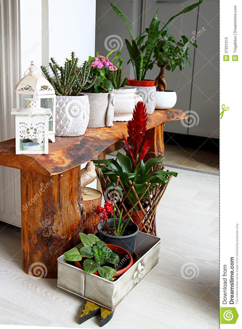 Indoor Botanic Garden For Room Decoration