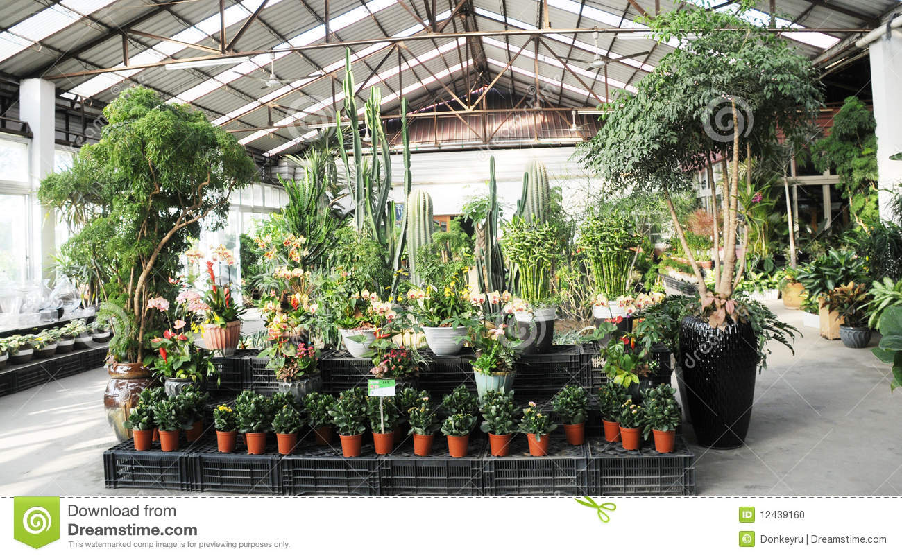 Indoor conservatory garden stock photo image of palm 12439160 workwithnaturefo
