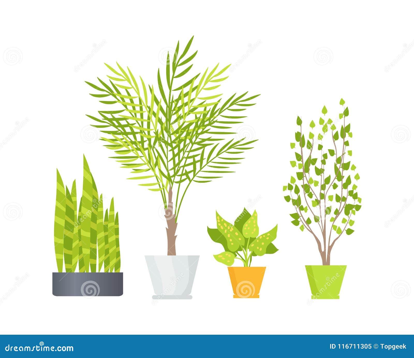 Indoor Floor Plants In Pots Isolated Illustrations Stock Vector ...