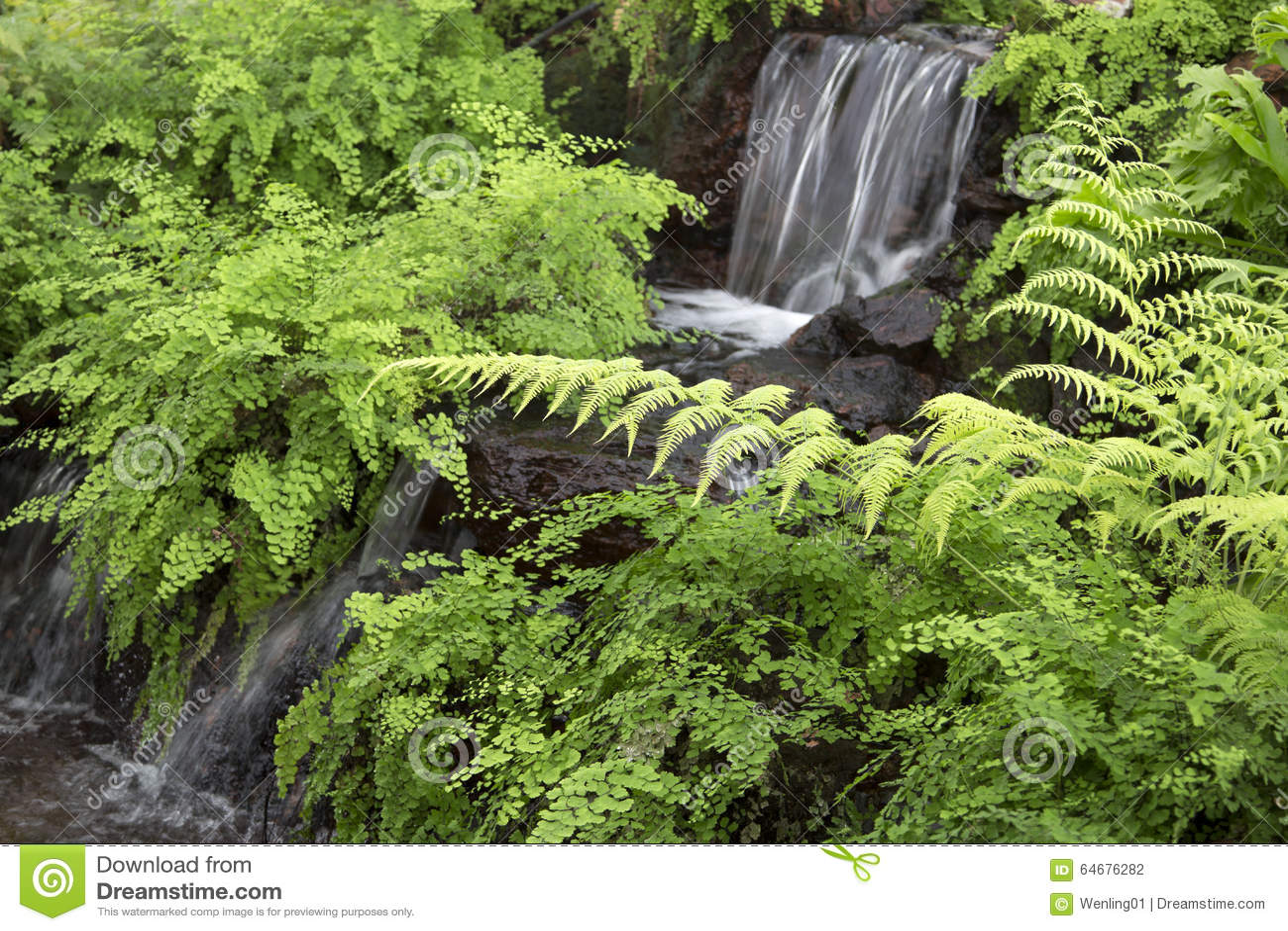 Nice Indoor Garden Design Stock Photo Image 63792894