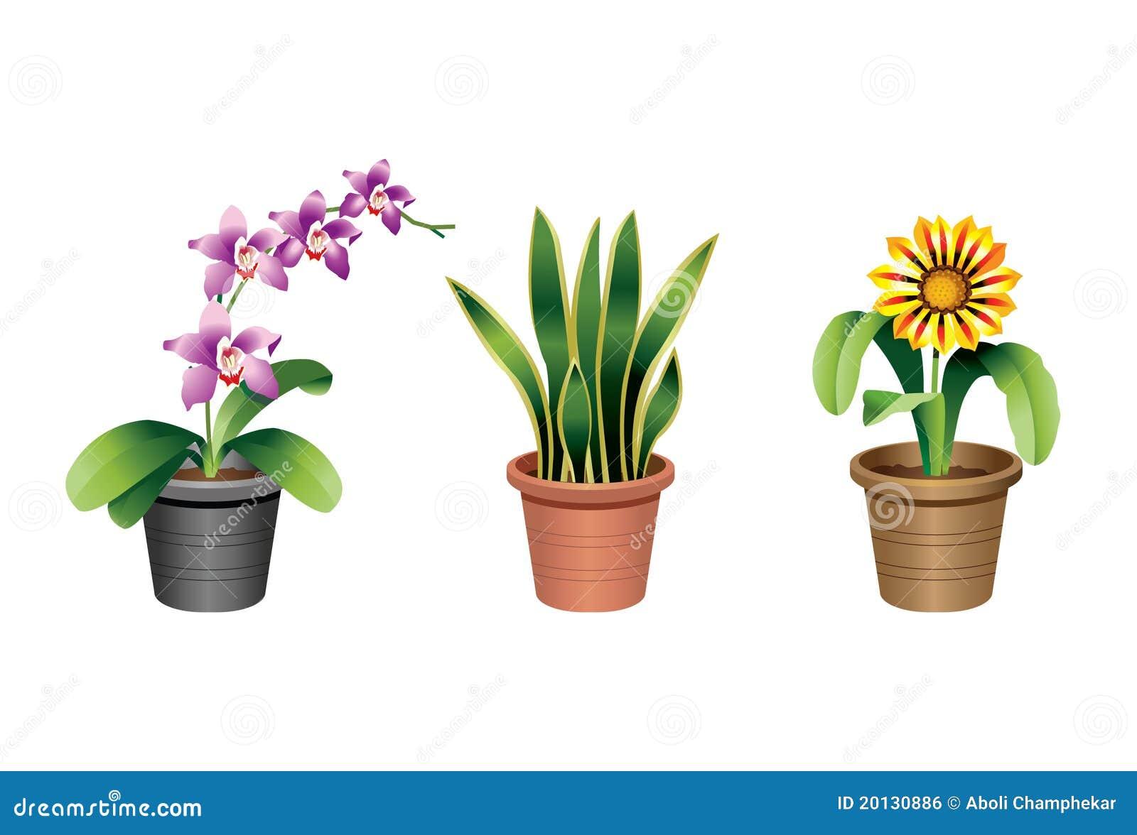 Indoor home office plants royalty unique royalty office plants great pot u0026 tropical plants - Indoor desk plants ...