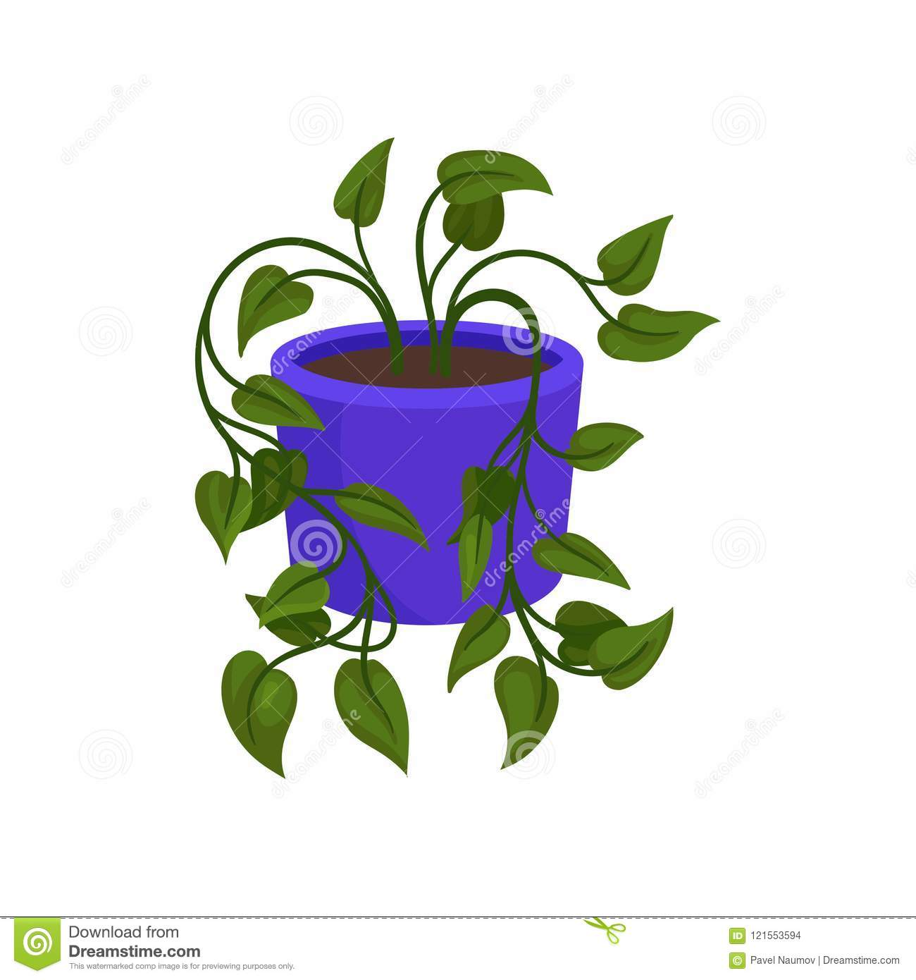 Indoor Philodendron Plant With Small Green Leaves Decorative Houseplant In Purple Ceramic Pot Flat Vector Icon Stock Vector Illustration Of House Background 121553594