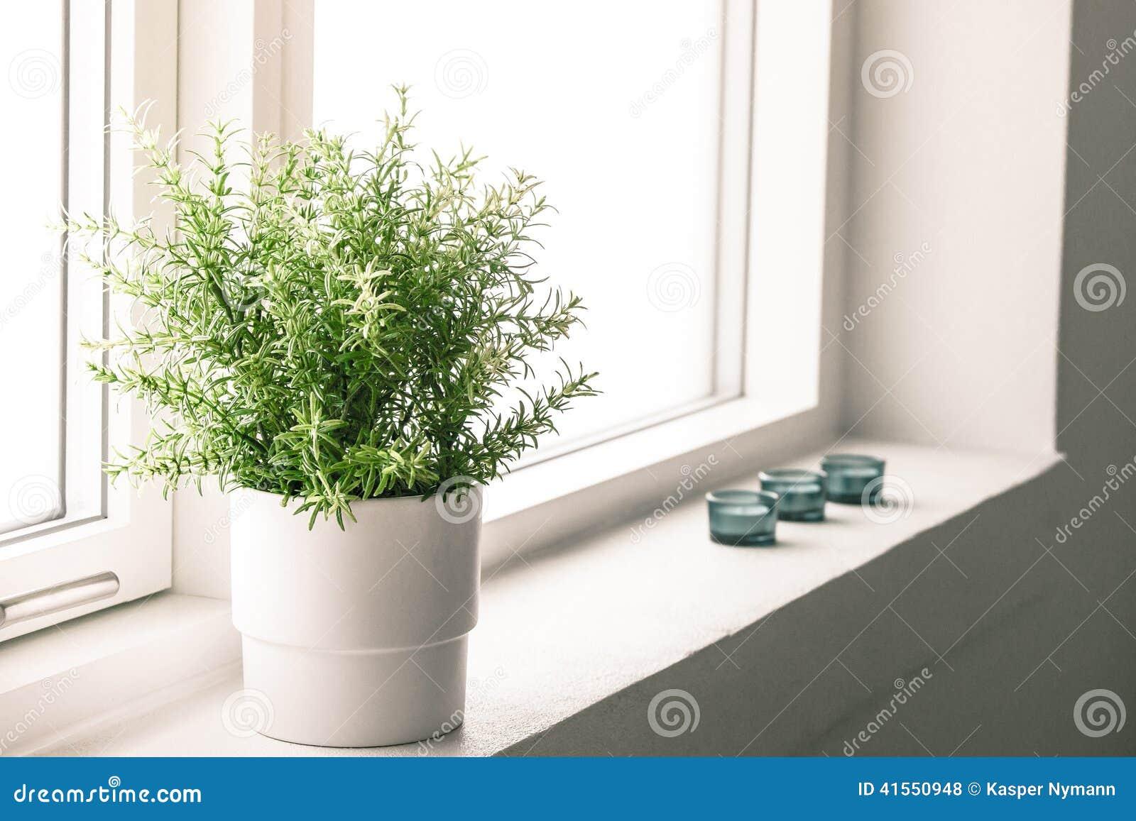 Indoor Plant In A Bathroom Window Stock Photo Image