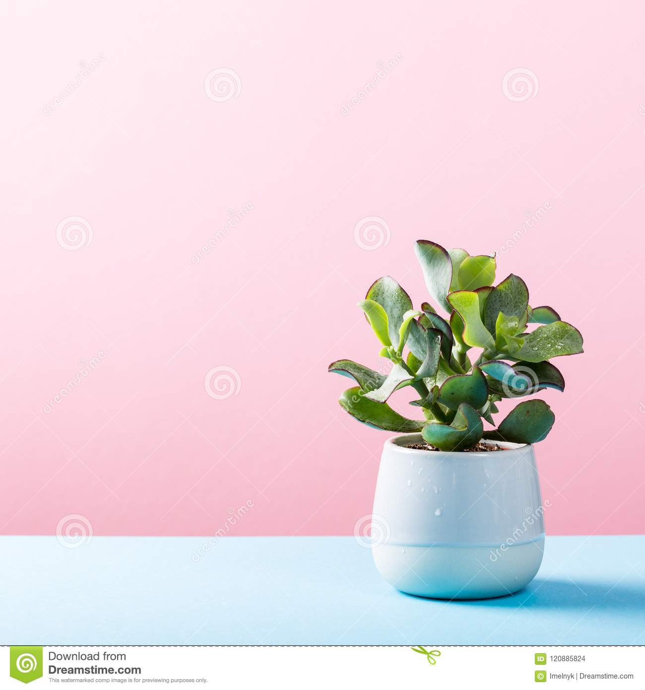 Indoor Plant Succulent Plant In Pot Stock Photo - Image of