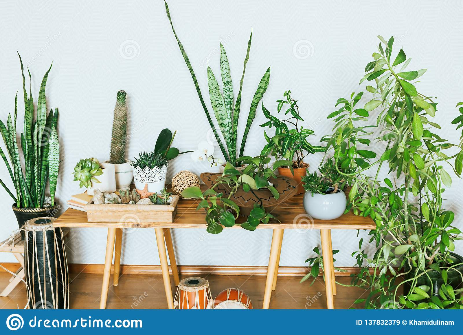 Plants in Pots. Indoor Plants in a Modern Cozy Interior. Stock ...