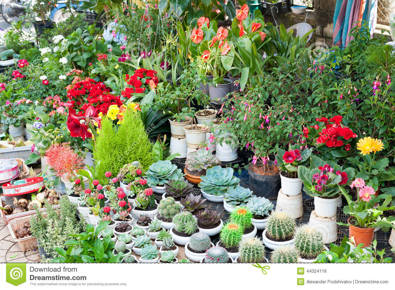 Indoor Plants For Sale Stock Photo - Image: 44324116