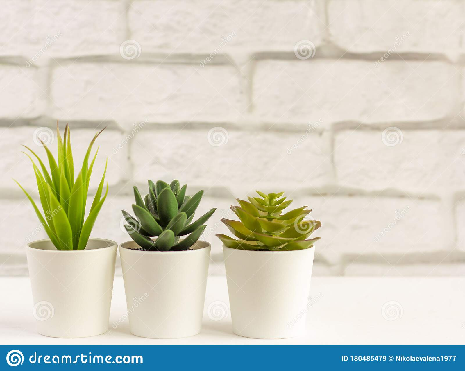 Indoor Plants Various Succulents In Pots Succulents In White Mini Pots Ideas For Home Decoration Copy Space Stock Image Image Of Flower Design 180485479