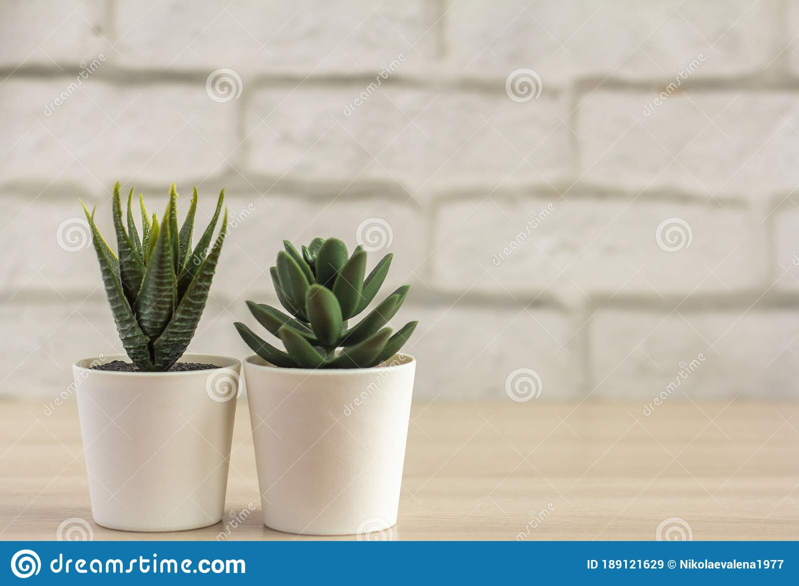 Indoor Plants Various Succulents In Pots Succulents In White Mini Pots Ideas For Home Decoration Copy Space Stock Image Image Of Garden Grow 189121629