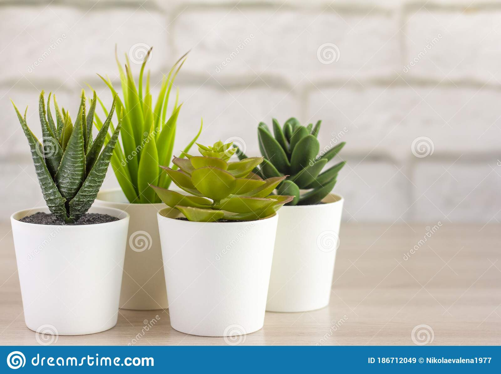 Indoor Plants Various Succulents In Pots Succulents In White Mini Pots Ideas For Home Decoration Copy Space Stock Image Image Of Diverse Modern 186712049