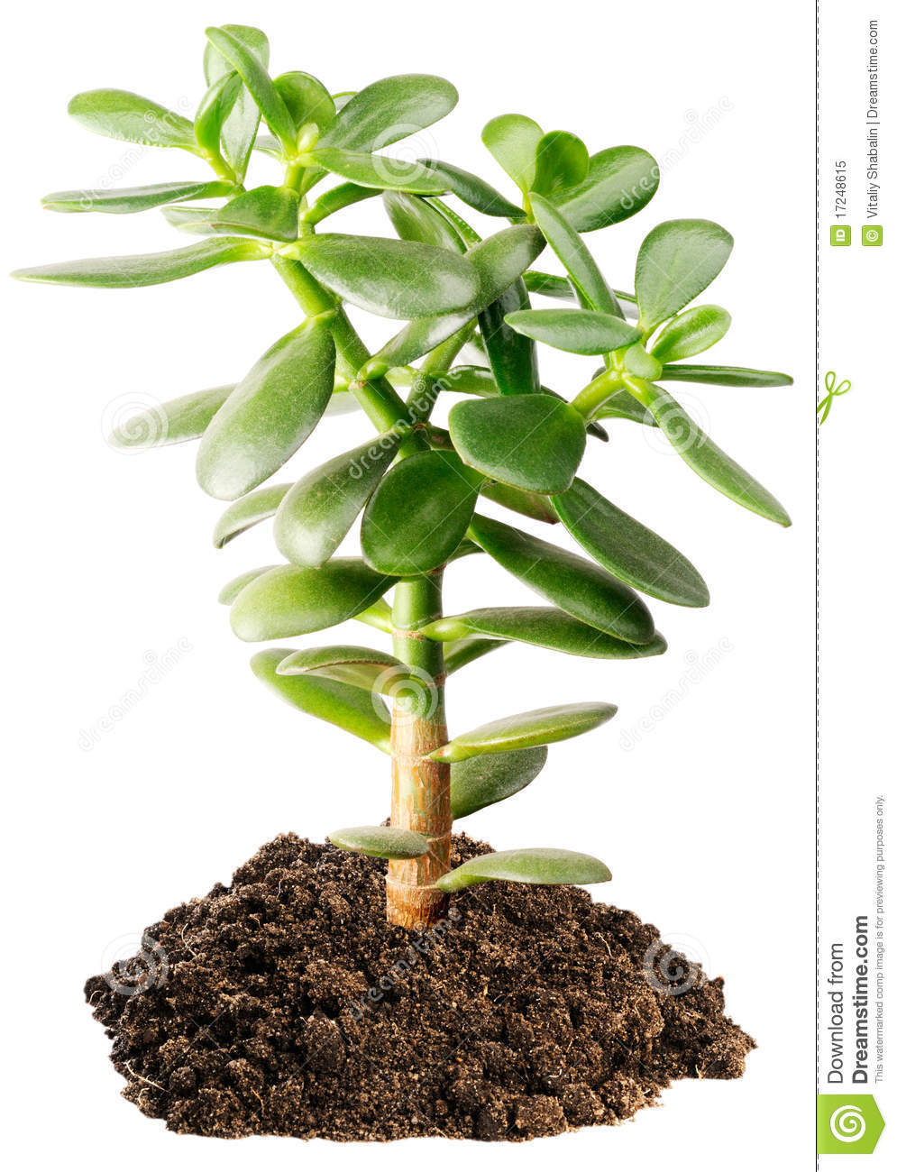 Indoor Succulent Plant Stock Image Image Of Plant Small 17248615