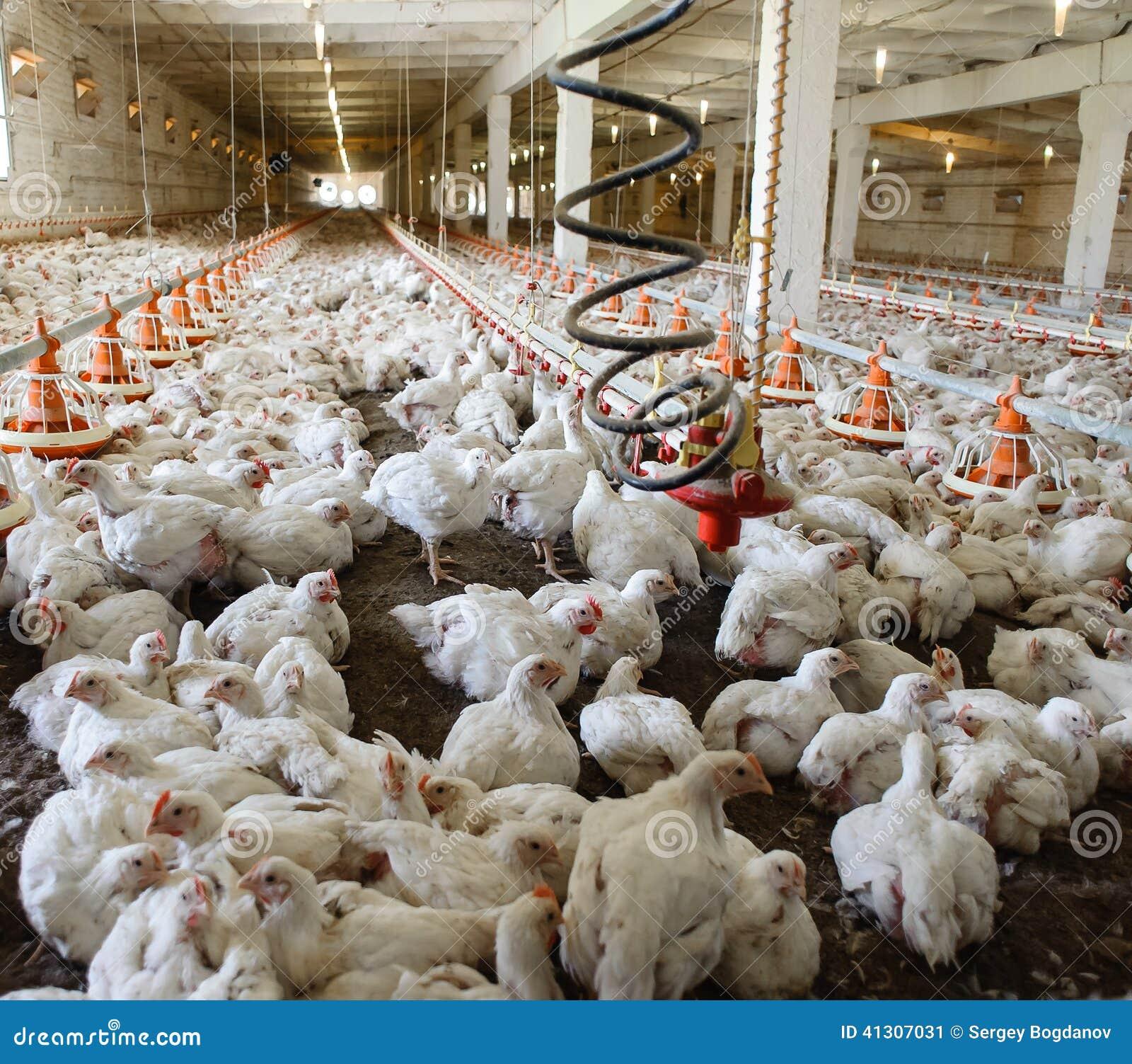 Industriële productie van eetbaar ei
