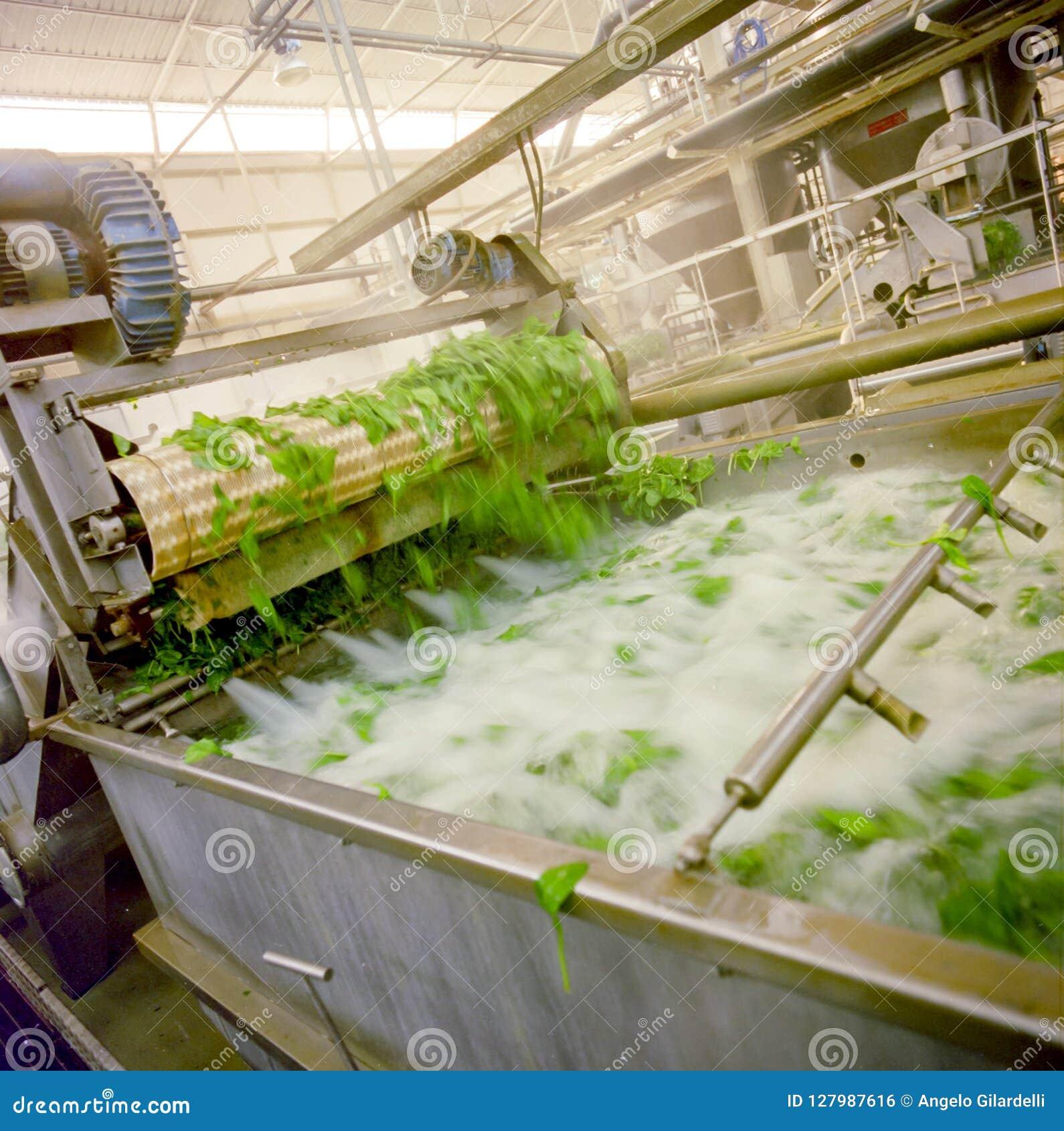 Industria alimentare, vasca di lavaggio degli spinaci