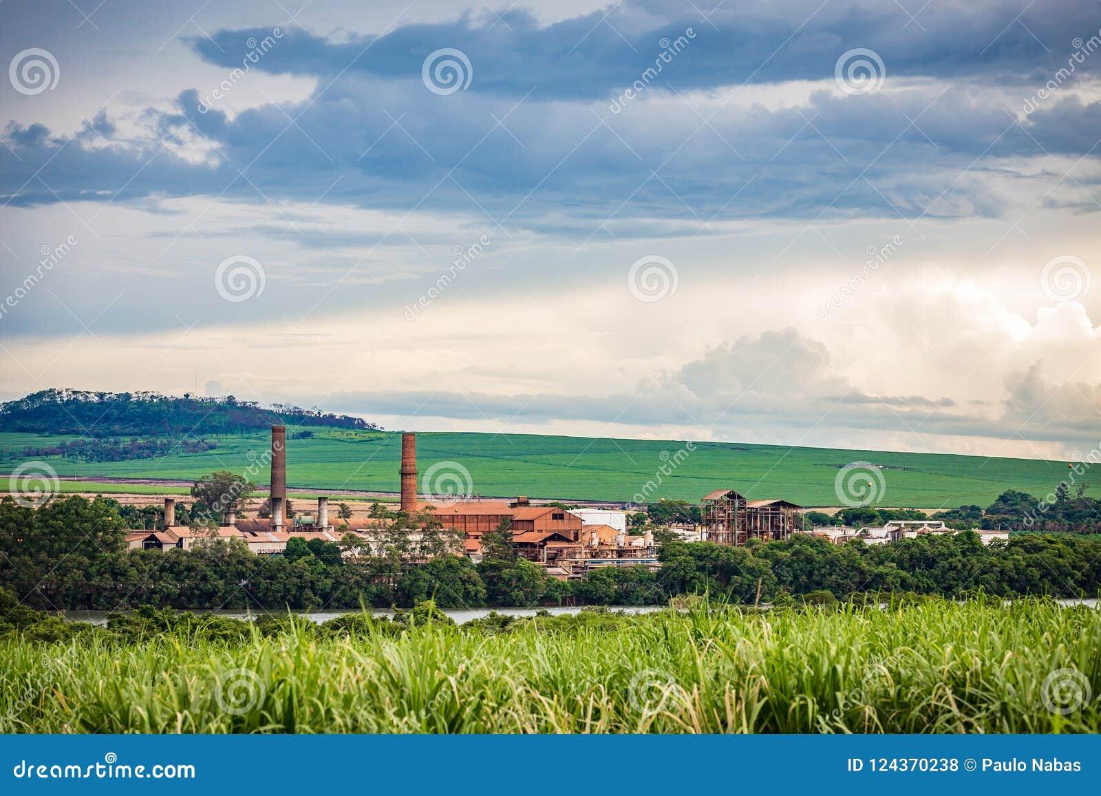 Industria della fabbrica della canna da zucchero - Sao Paulo, Brasile