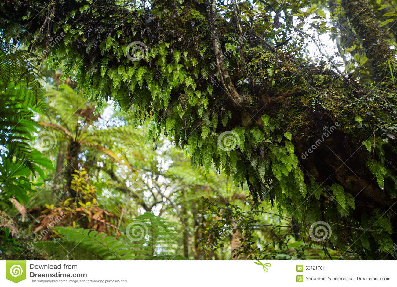 Infödd buske av Nya Zeeland