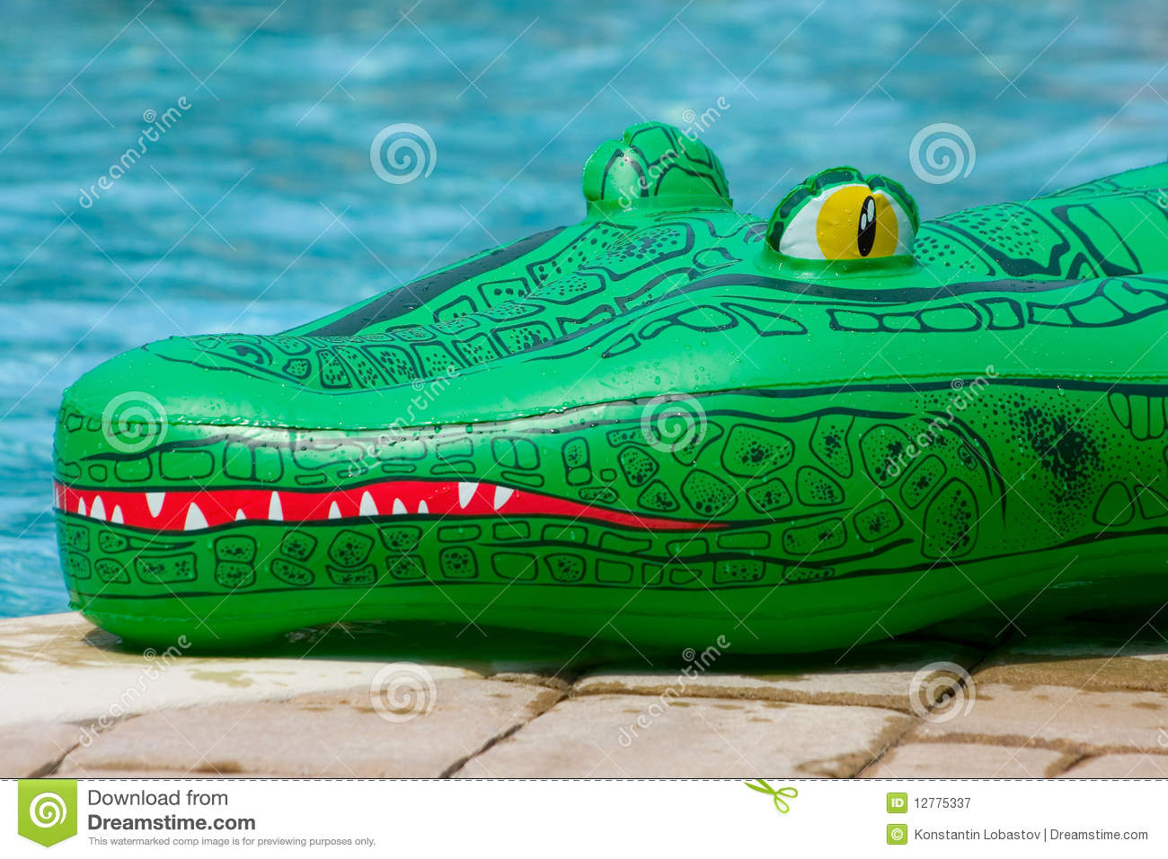 Inflatable Alligator Toy Stock Image Image Of Swimming