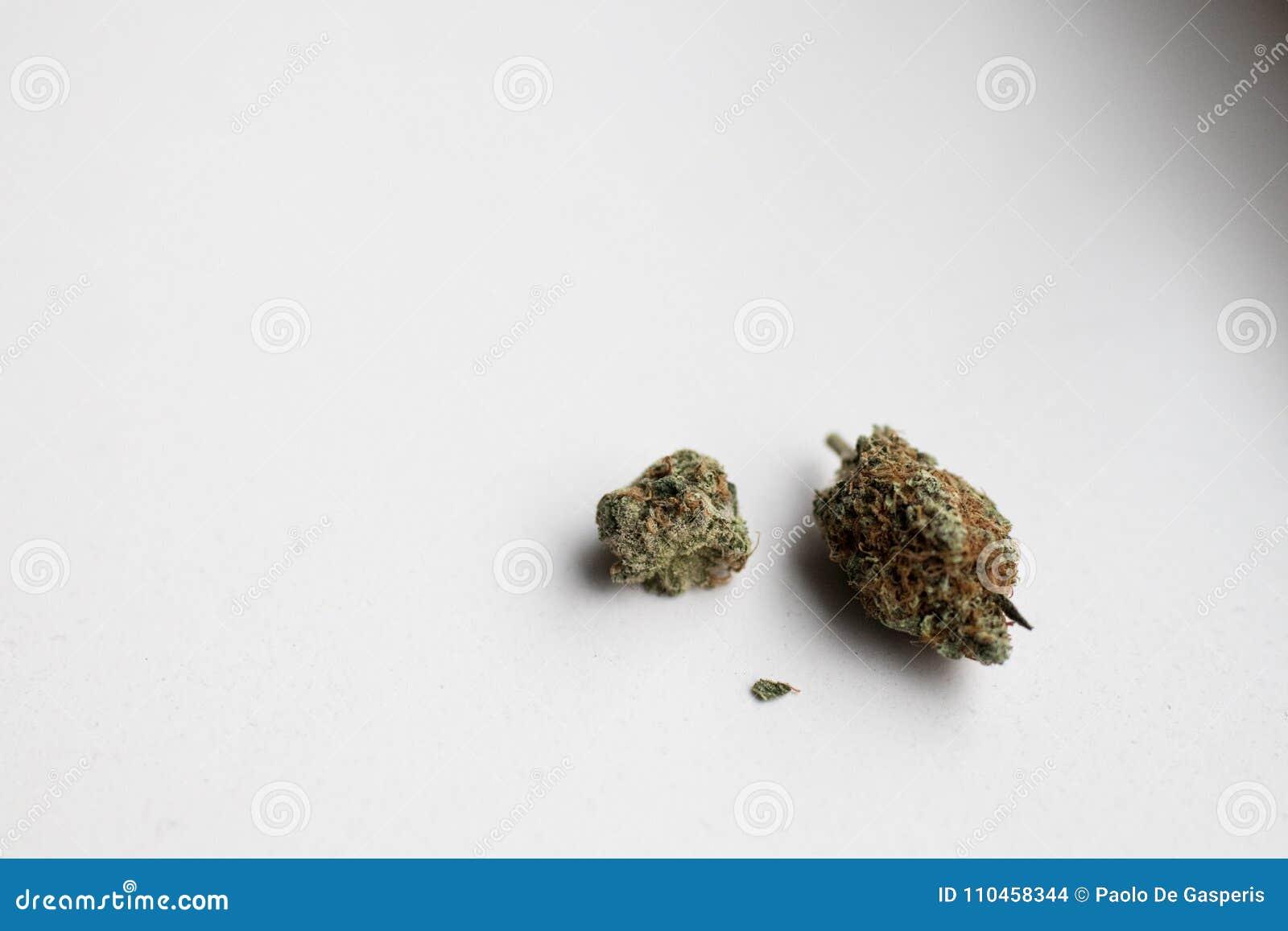 Inflorescence av laglig cannabis i holland på en vit bakgrund