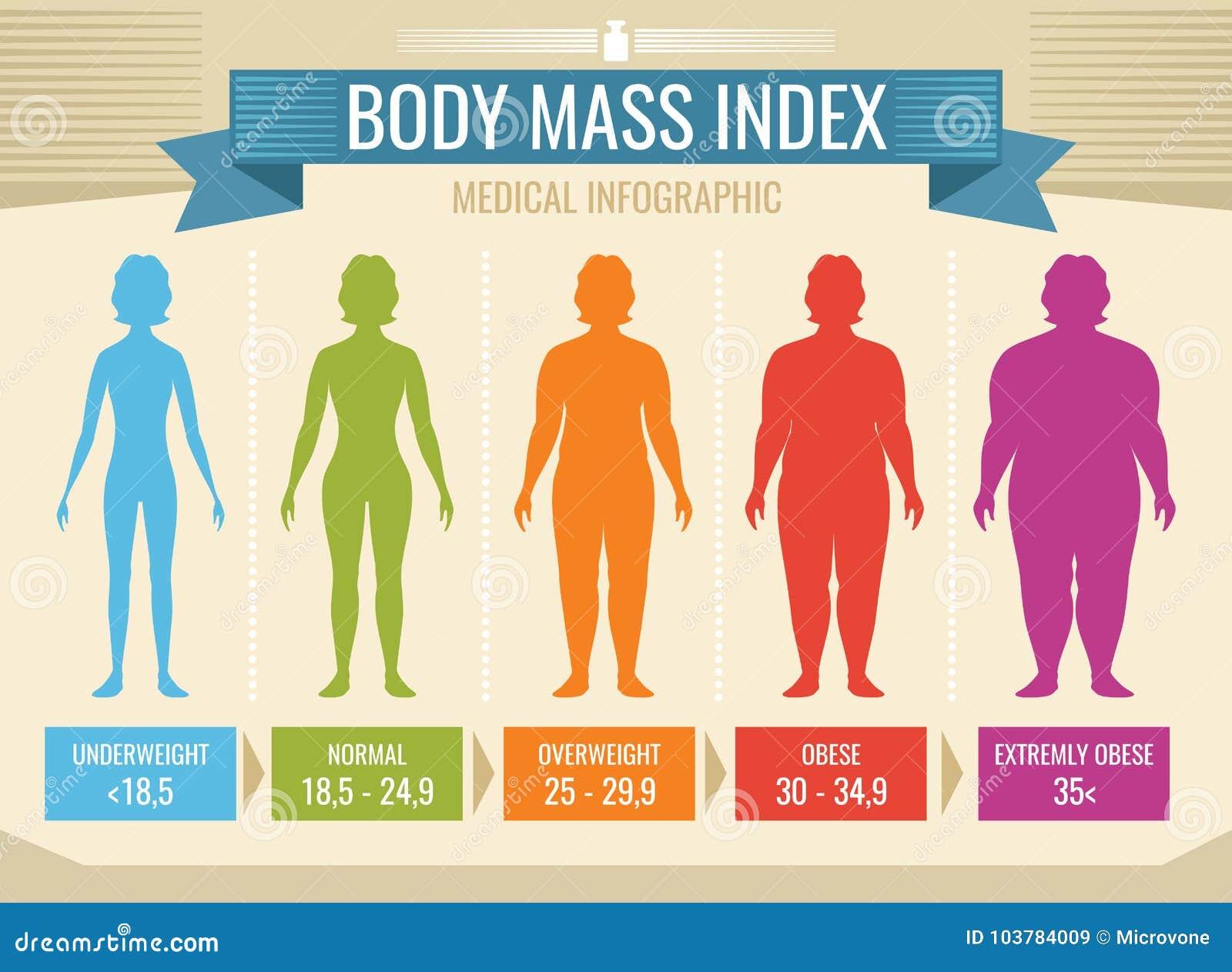 Infographic Médico Del Vector Del índice De Masa Corporal De La ...