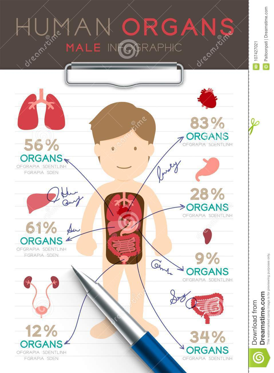 Infographic Male Human Organ Set, Doctor Writing Paper Chart With ...