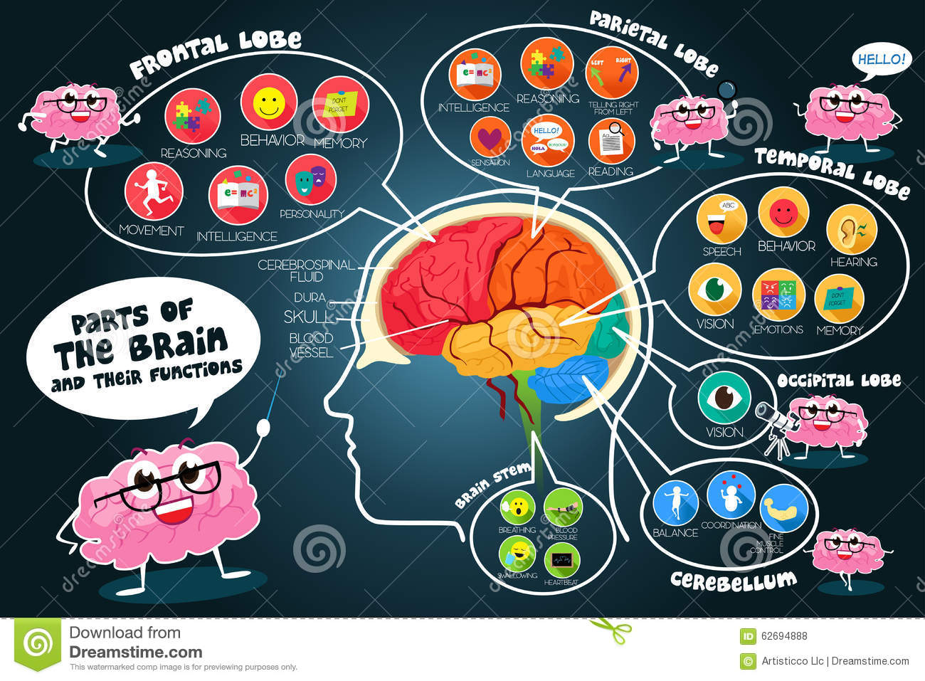 typical business plan sections of the brain