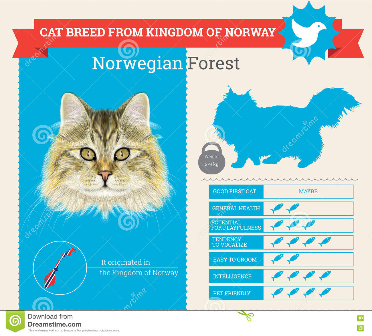 Infographics för norrmanForest Cat avel
