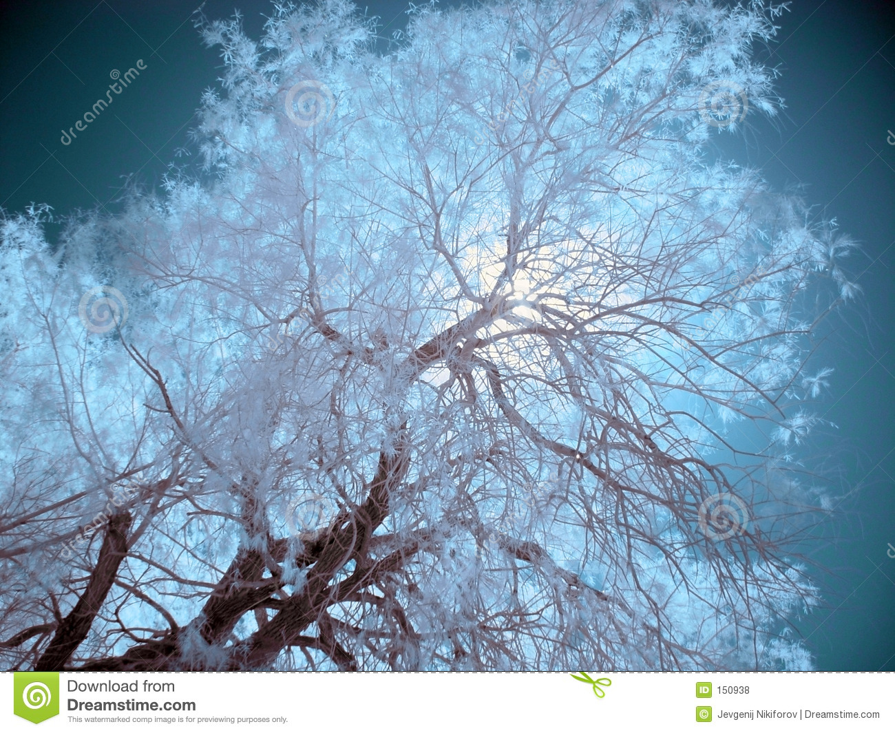 Infrared Trees, Death Valley