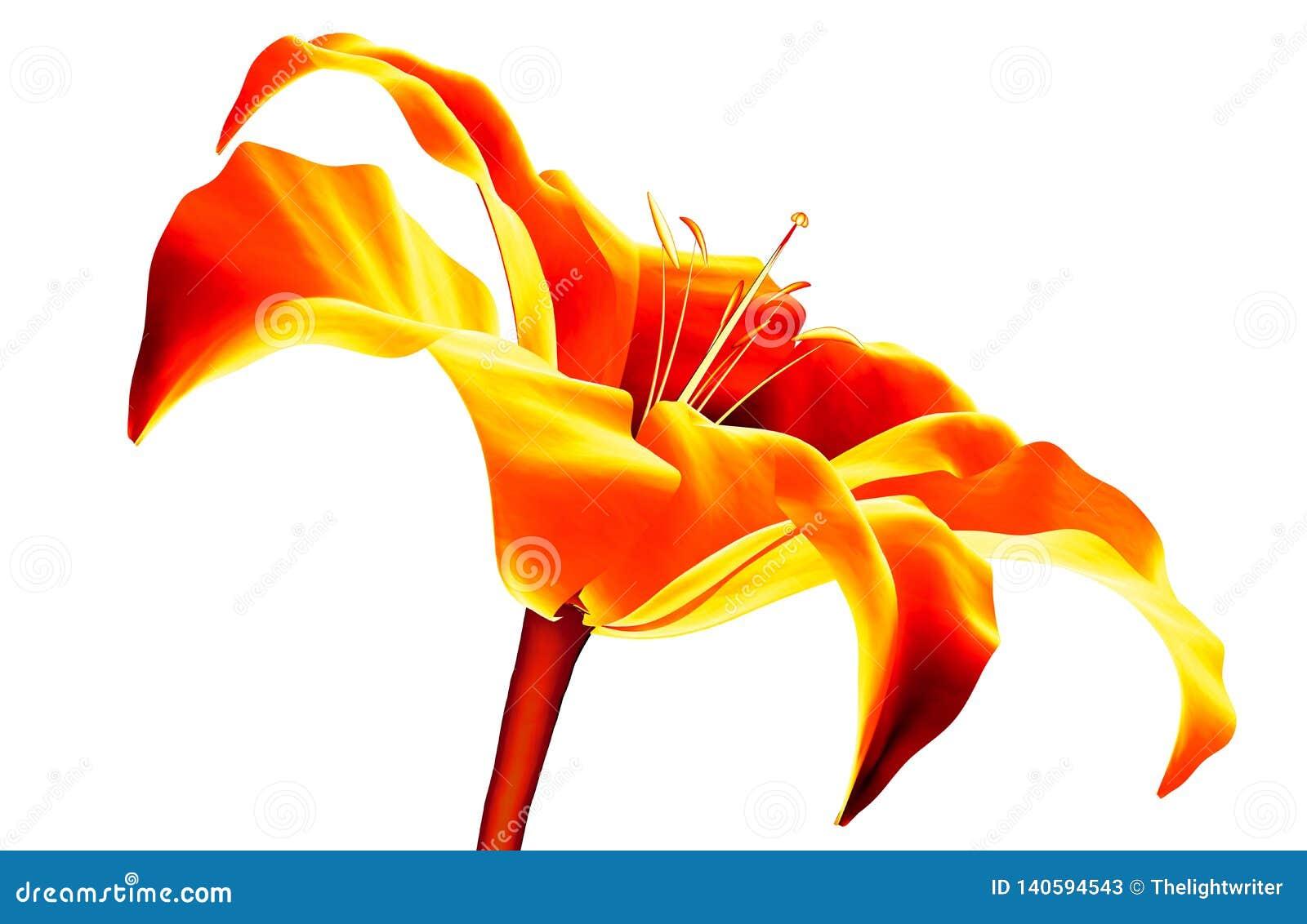 Infrarood die beeld van een bloem op wit, de 3d illustratie van Amaryllis wordt geïsoleerd