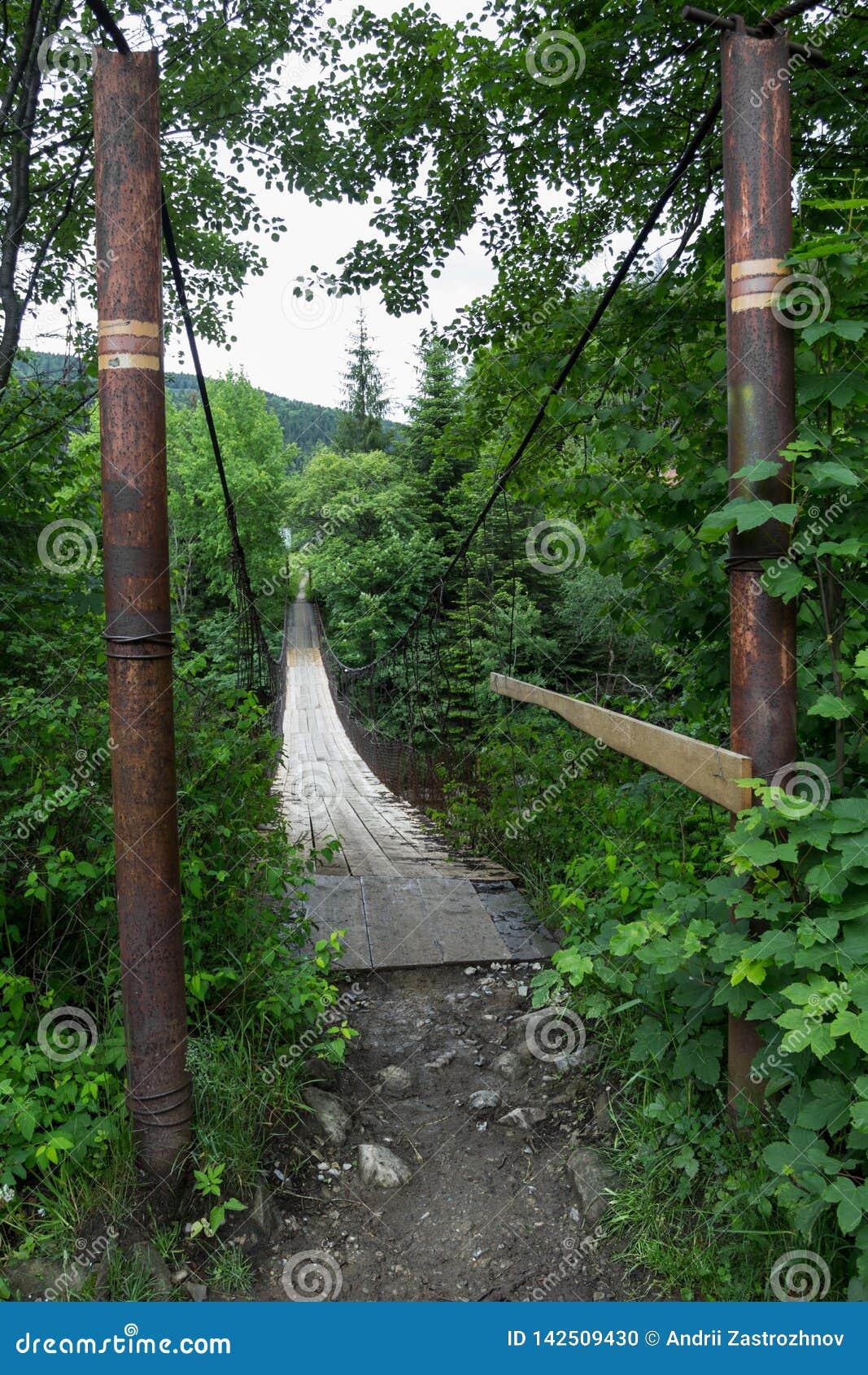 Ingång till den gamla upphängningbron över floden i skogen