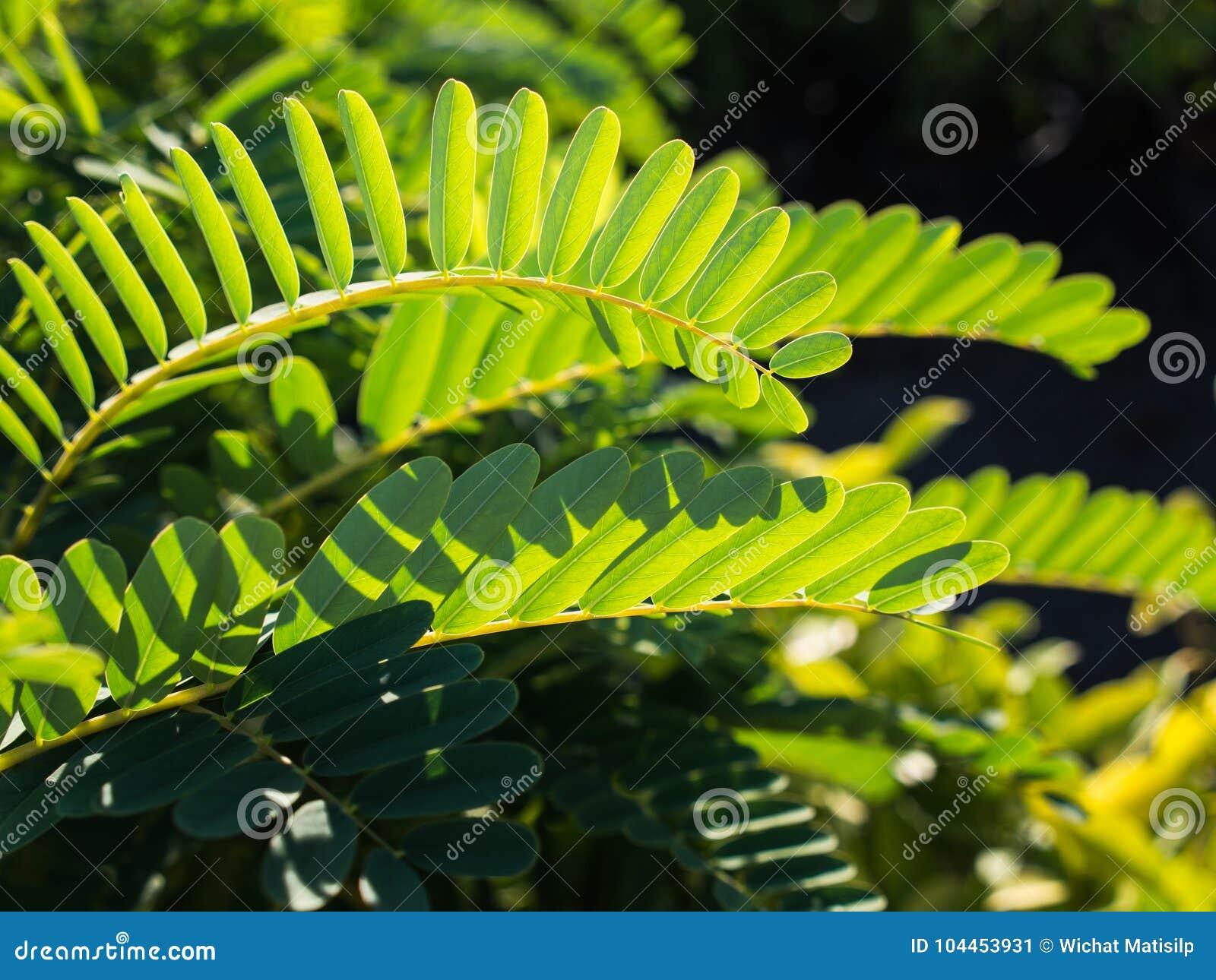 Ingénieux conçu de l arbre de colibri végétal