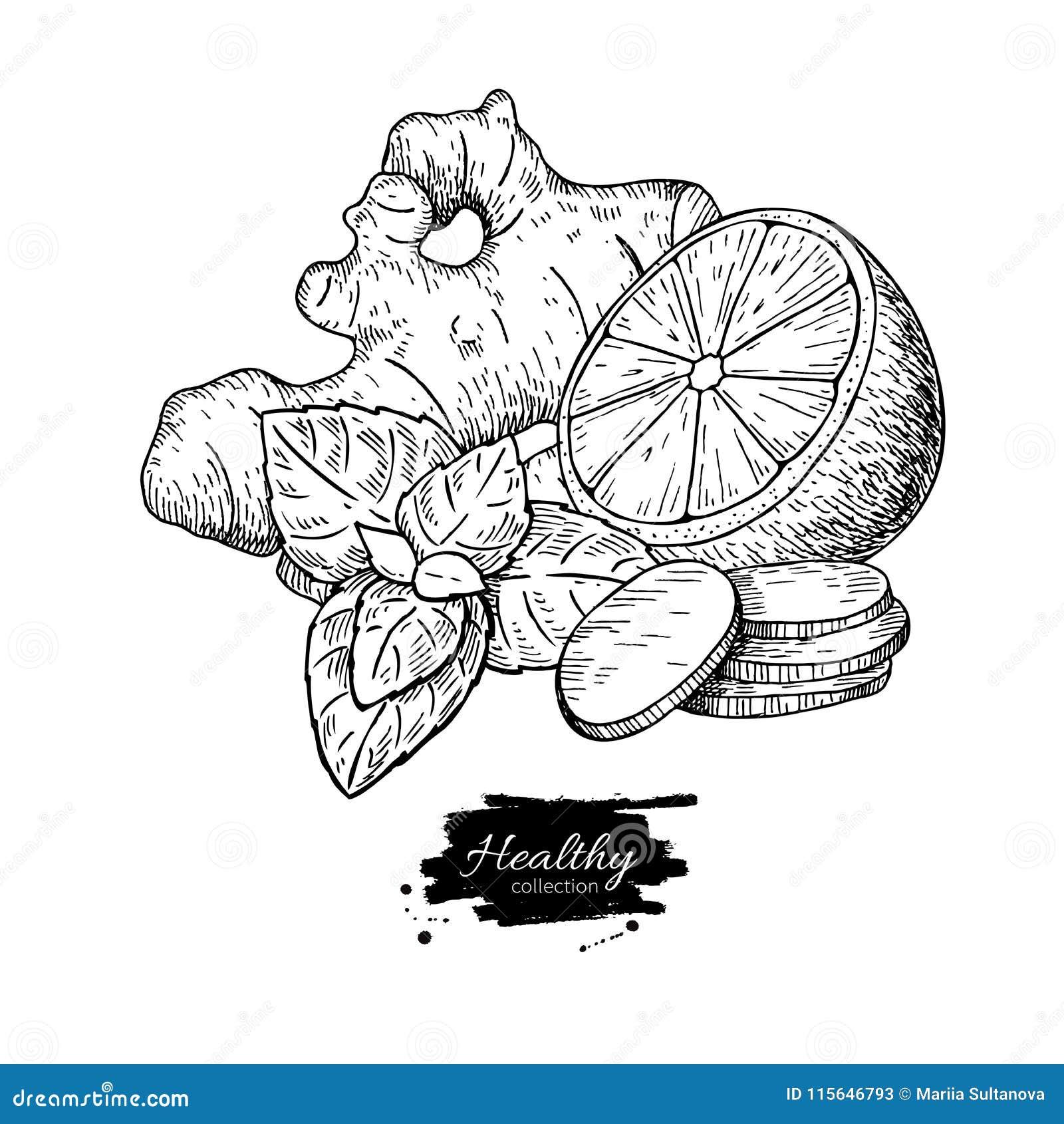 Ingefära-, citron- och mintkaramellvektorteckning Rota, hearbbladet och fruien