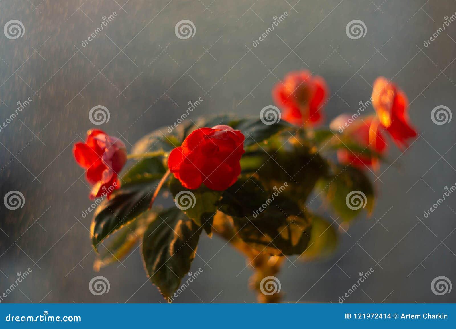 Ingemaakte bloemen op de vensterbank