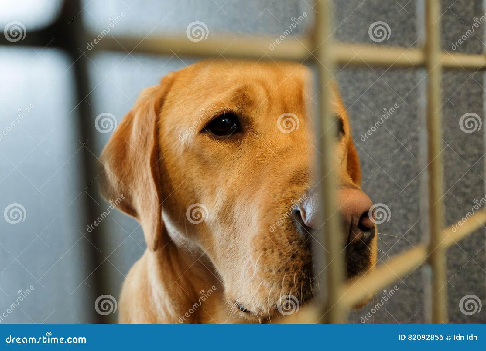 Ingesloten hond