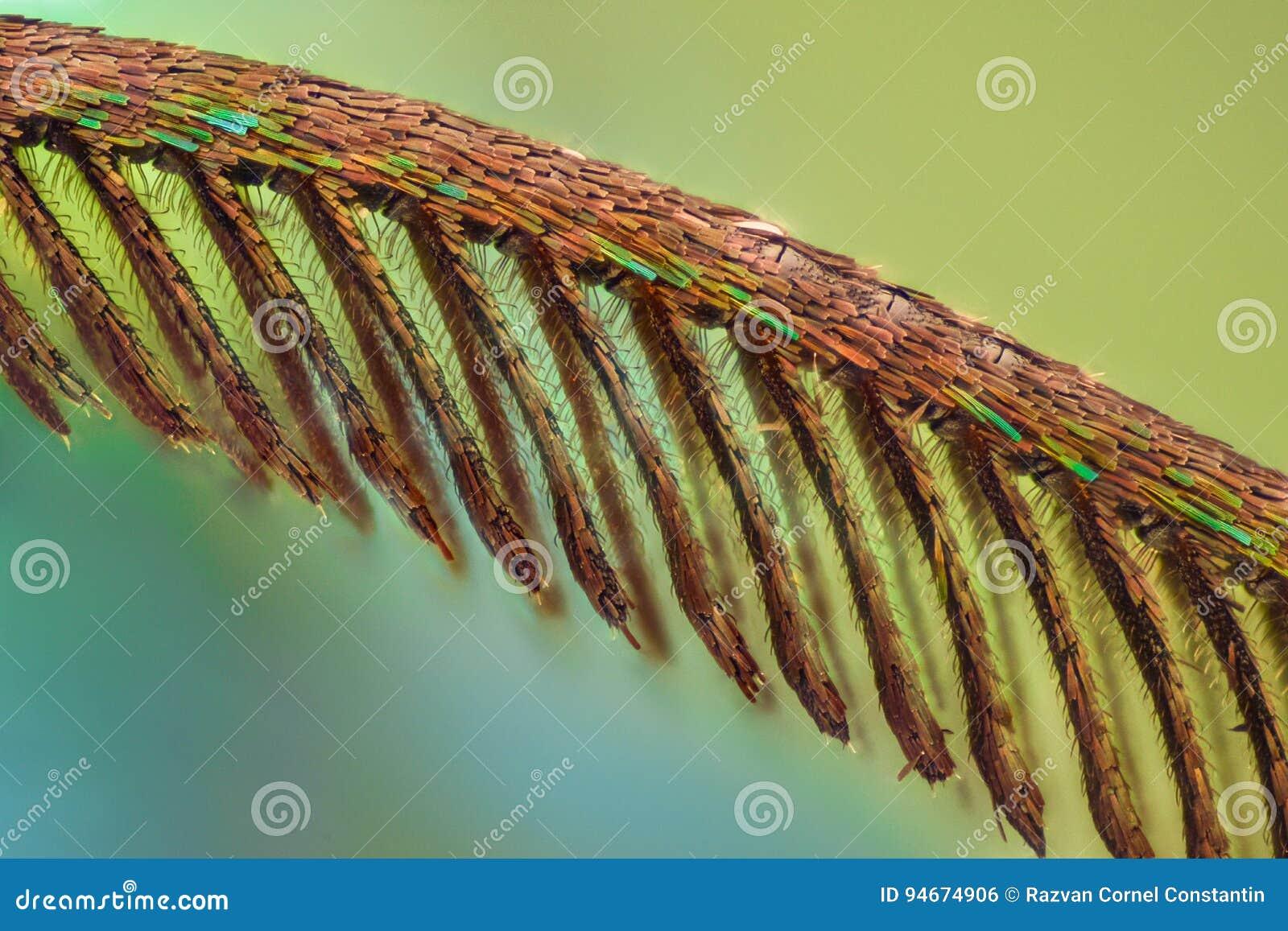 Ingrandimento estremo - lepidottero di giorno colorato