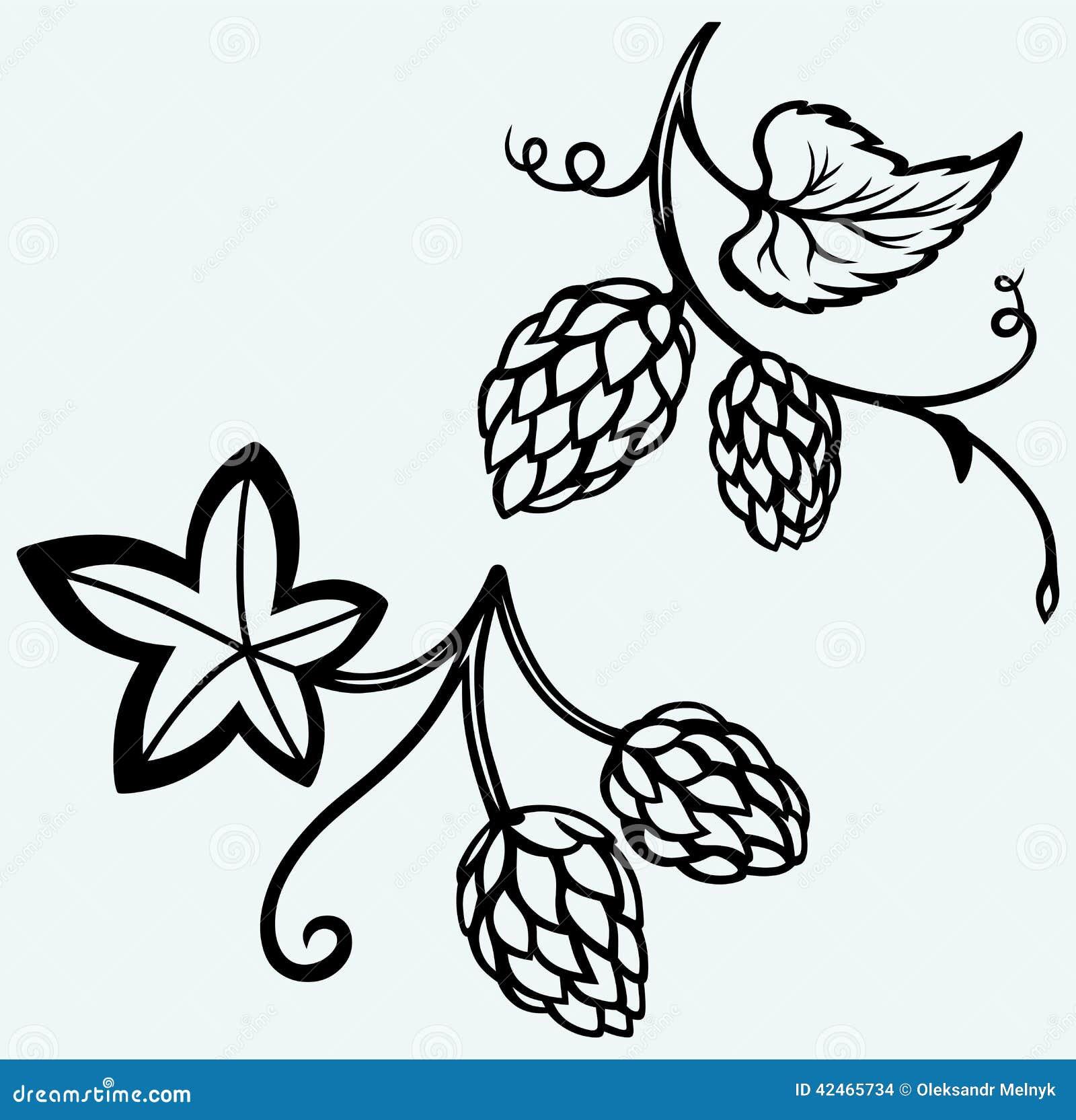 Ingrediënten voor bier hop
