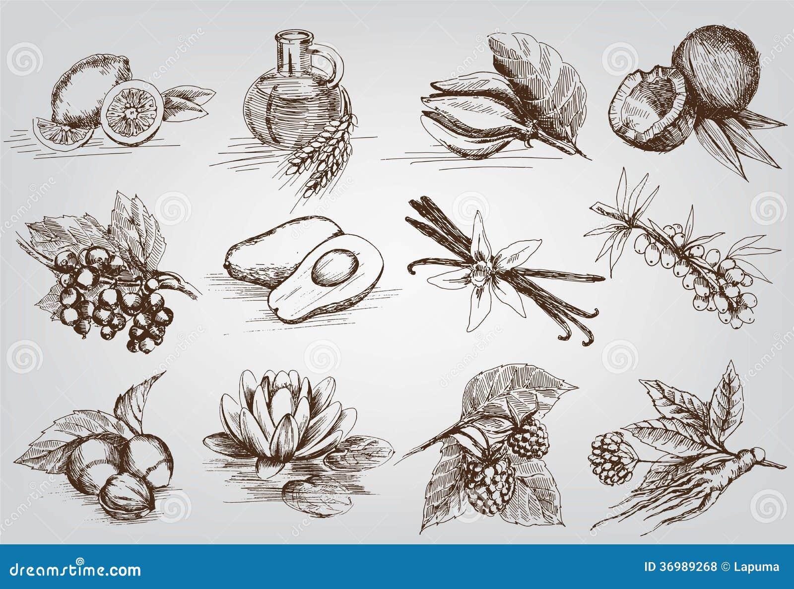 Ingrediënten voor natuurlijke schoonheidsmiddelen
