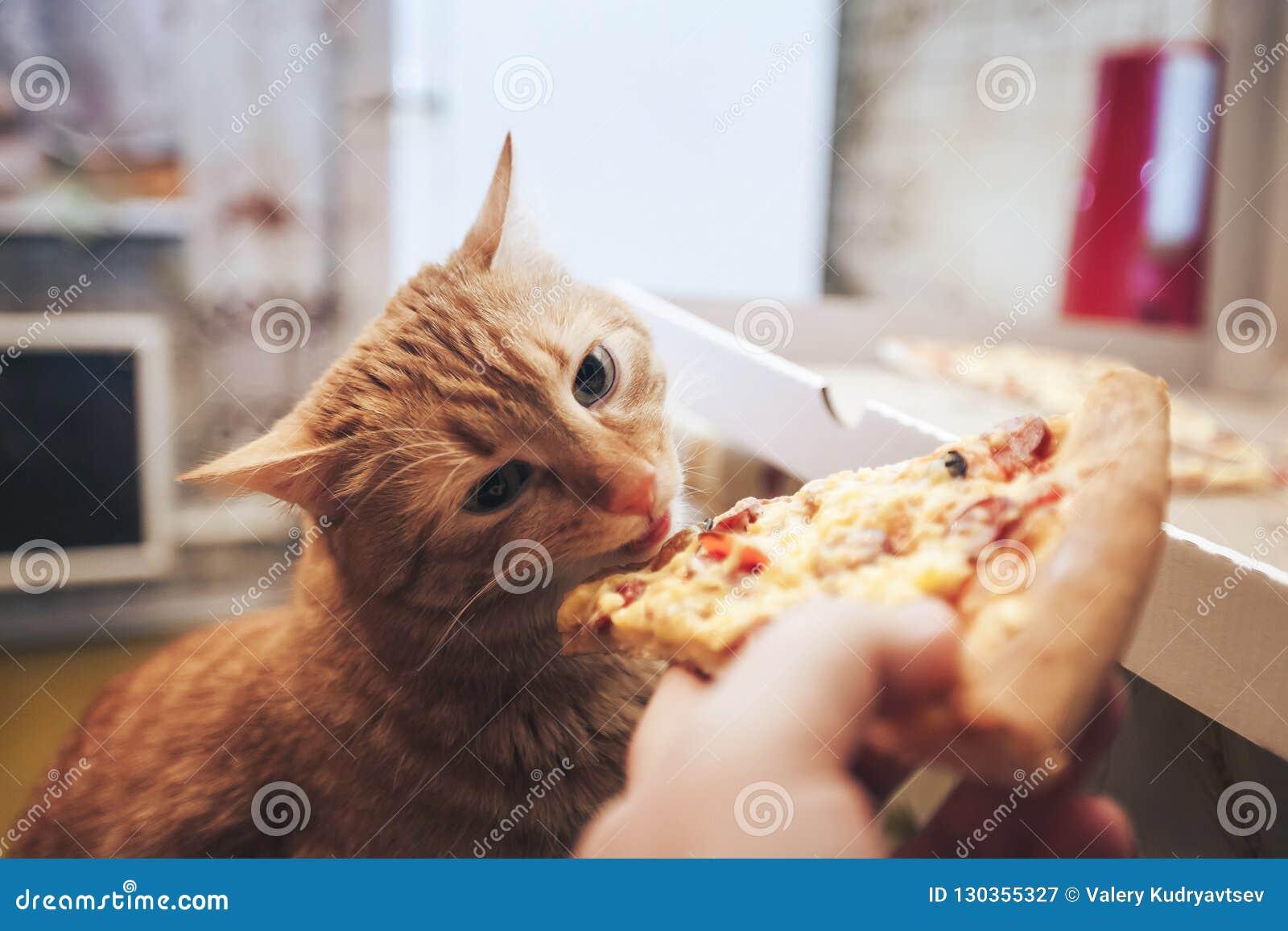 Ingwer und Pizza