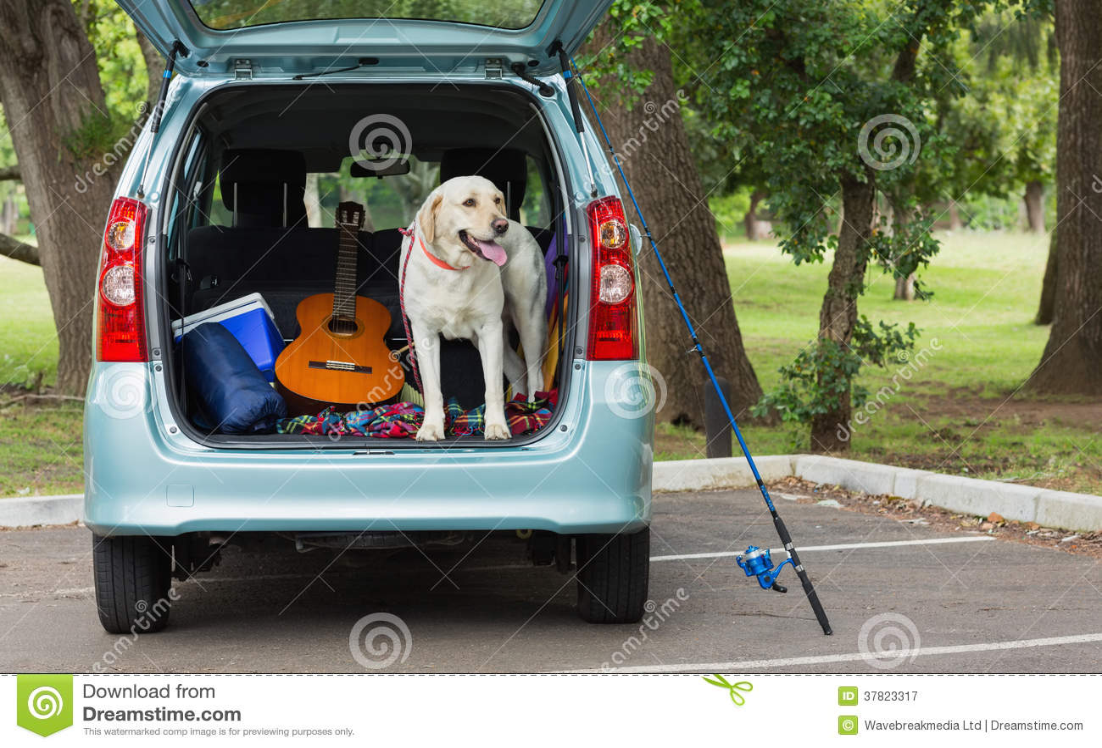 Inhemsk hund i bilstam