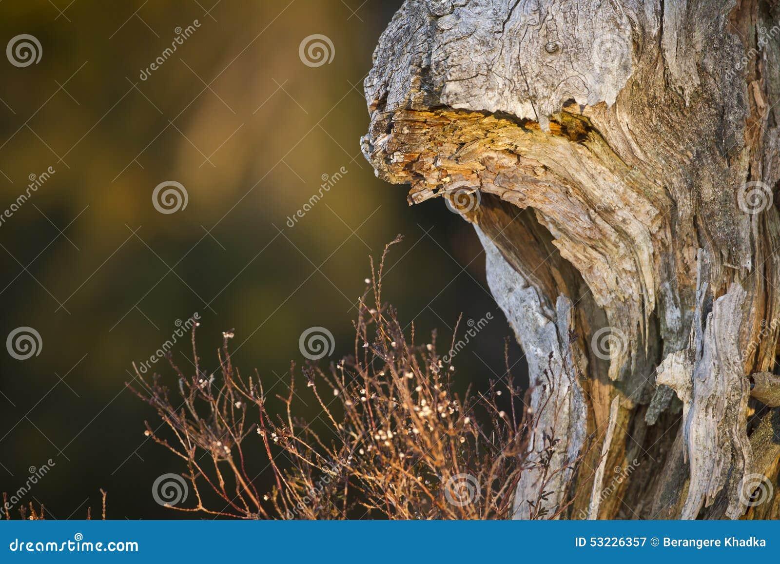 Inicio de sesión muerto el bosque, los Vosgos, Francia
