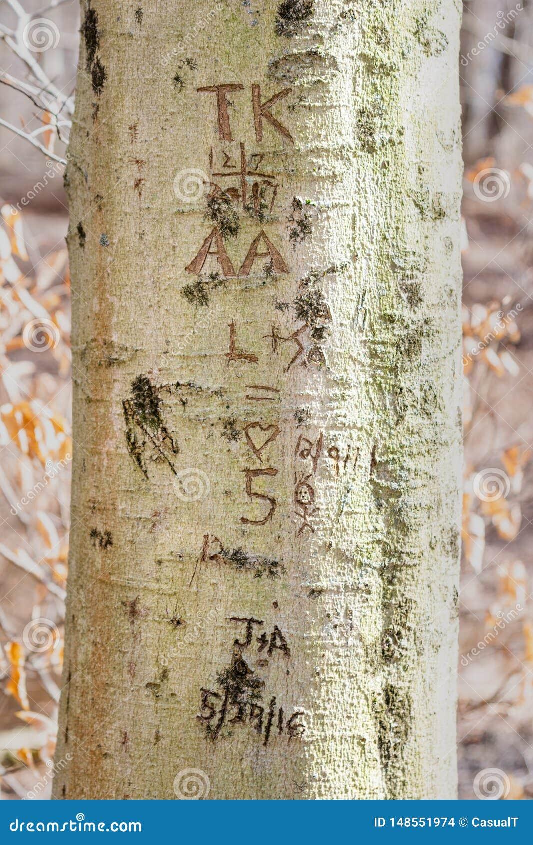 Initialen en data, in een boomboomstam die worden gesneden