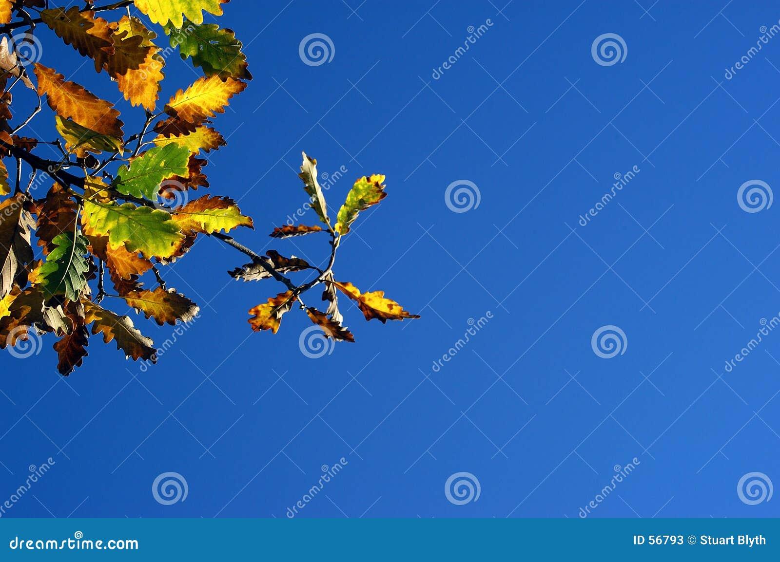 Inizio dell autunno