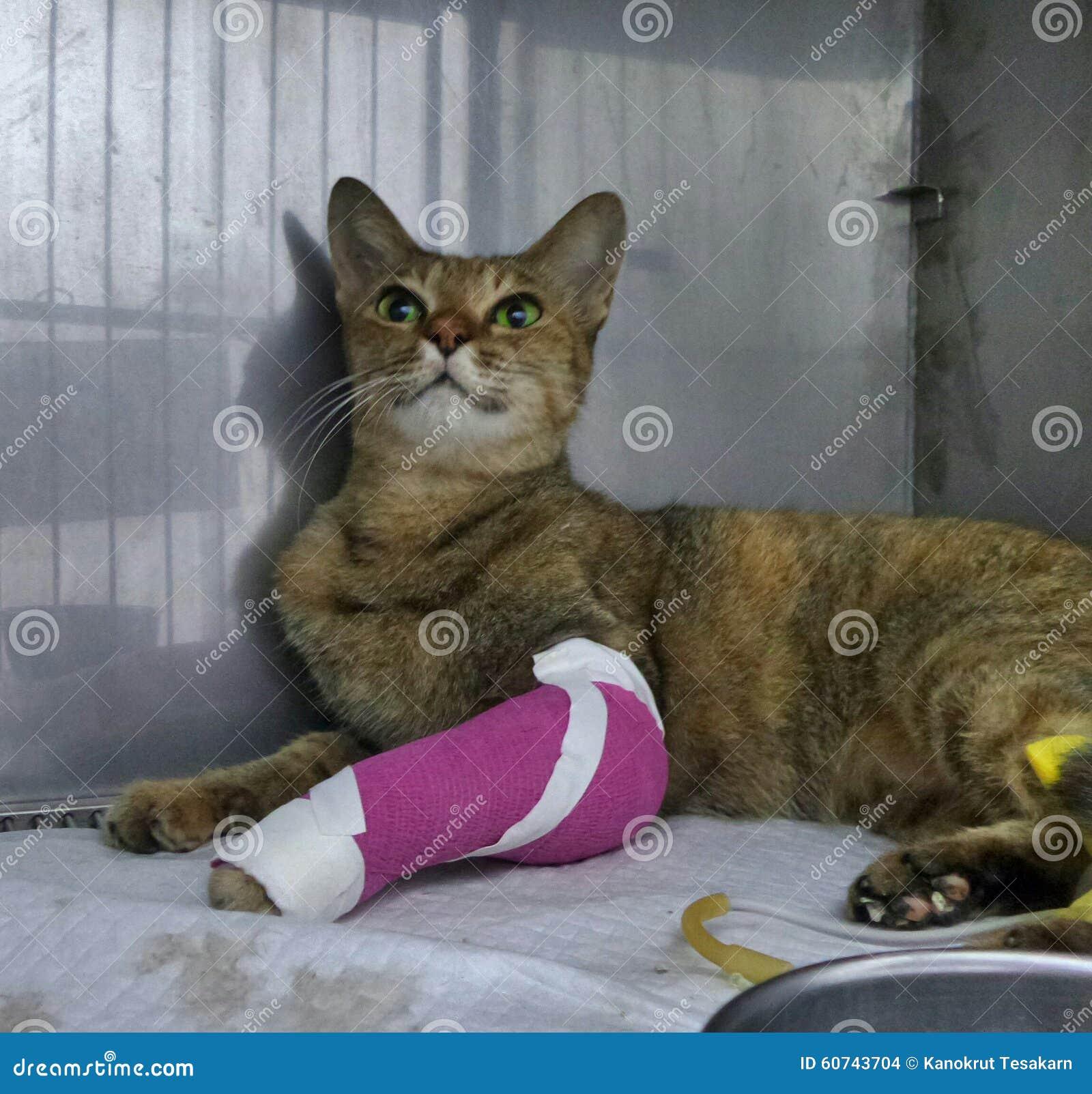 siamese kittens for sale ohio