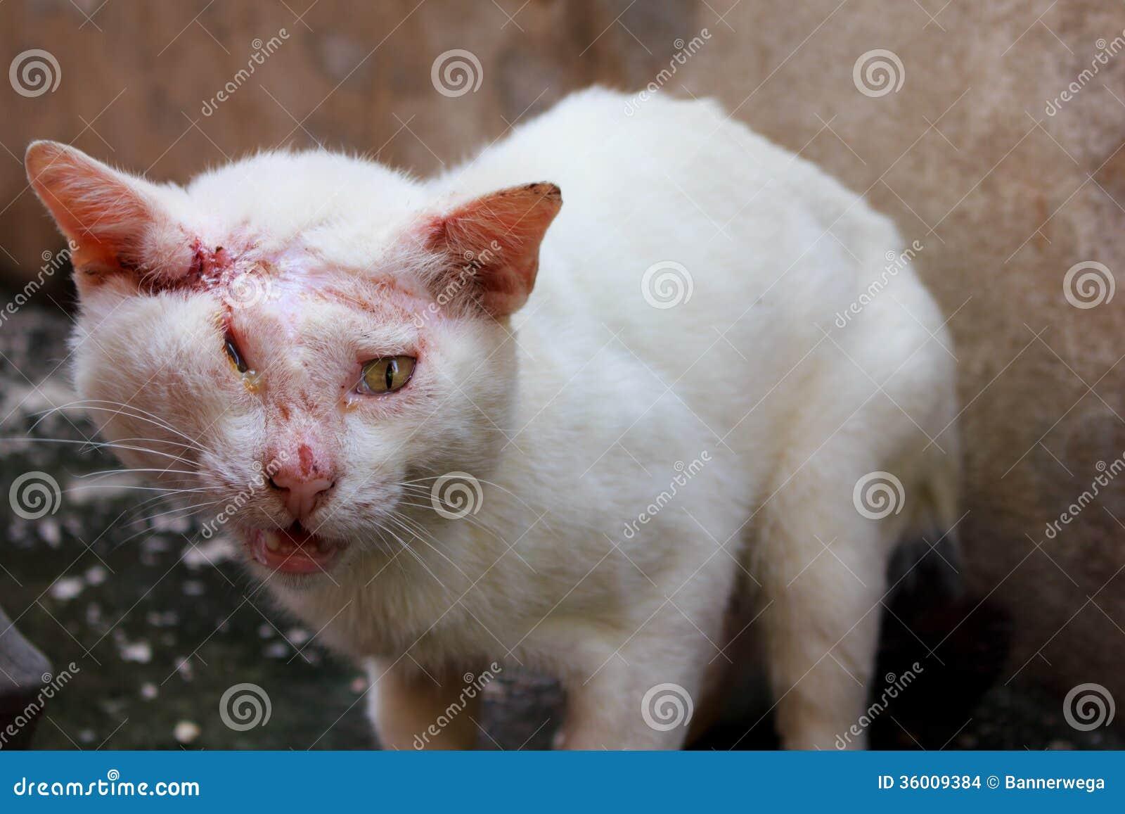 Weiße Zecken Katze